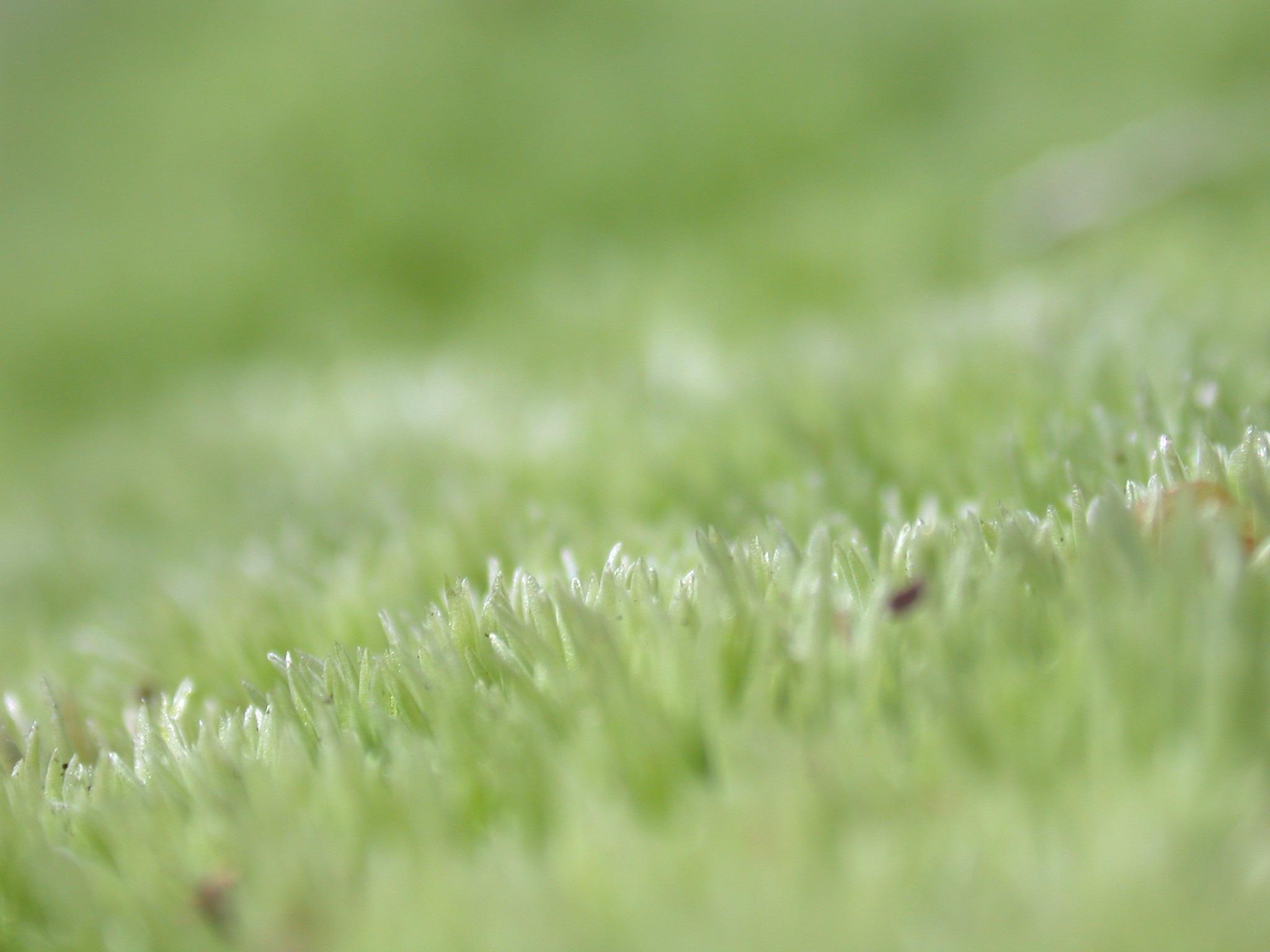 janneke extreme closeup depth of field moss