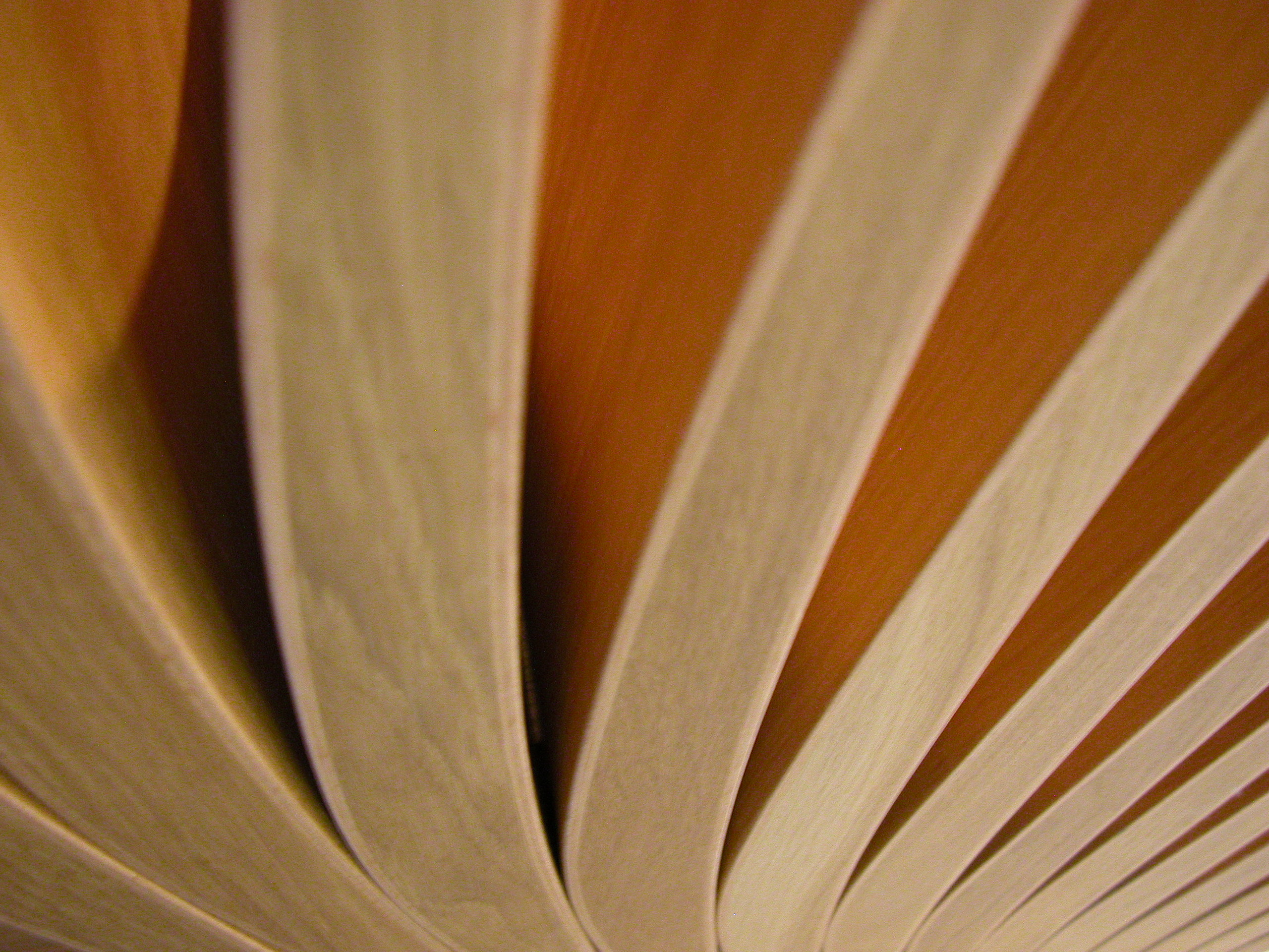 janneke wood bend curves very thick pages of a book :)