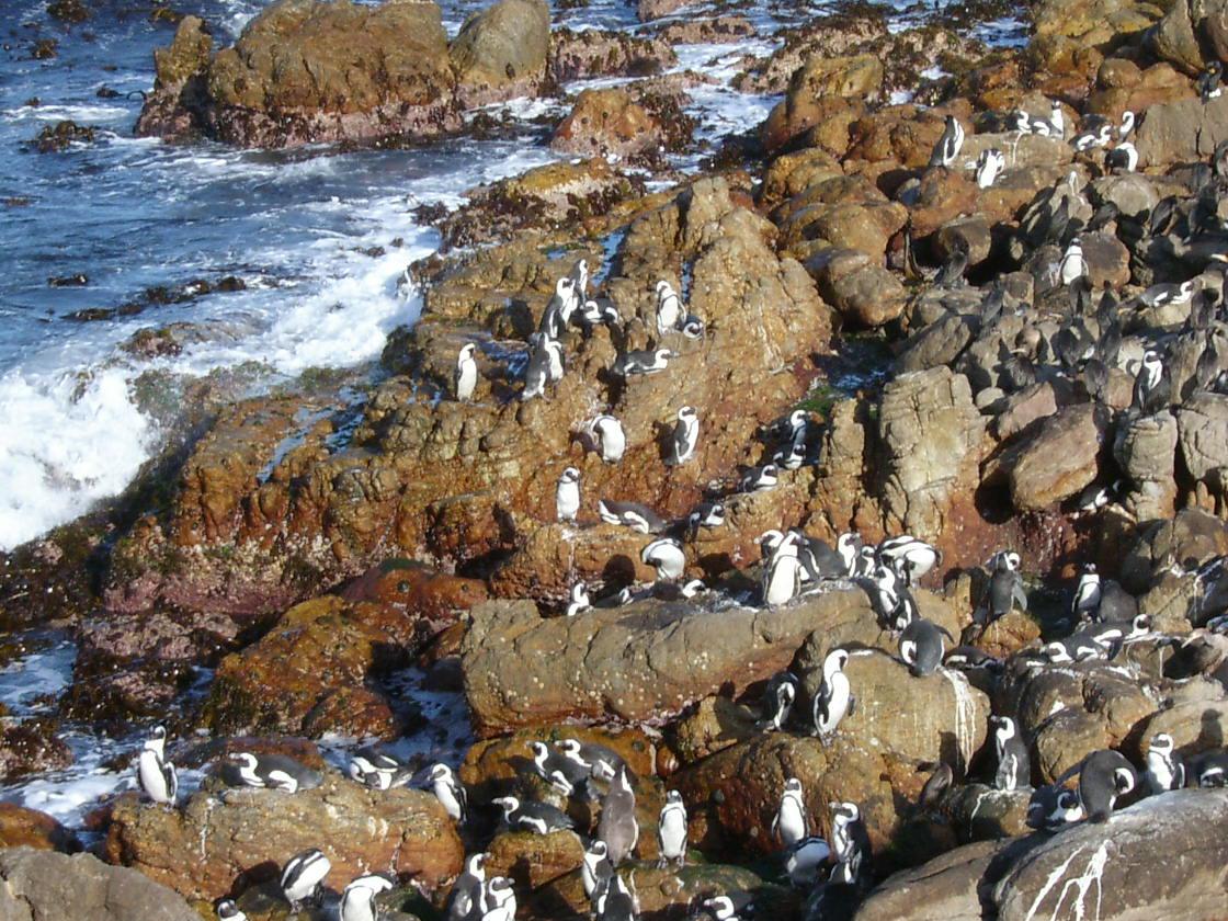 kartien happyfeet happy feet pinguin pingu pinguins nature animals birds rock seascape coast coastal