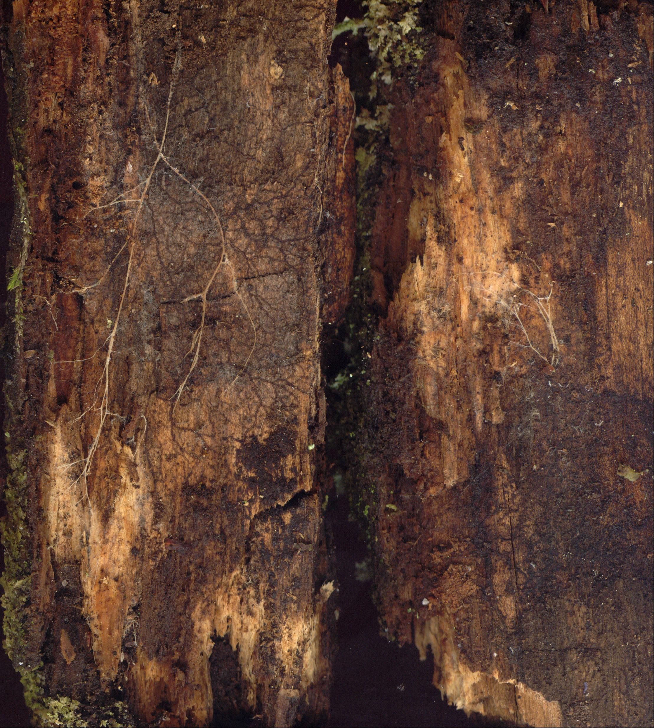 kinkyfriend wood rotten bark