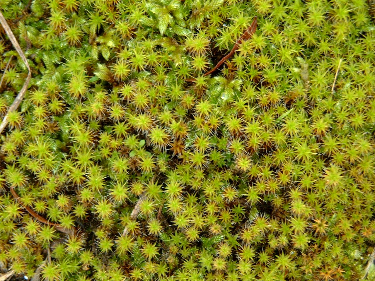 maartent plants green field dense thistles
