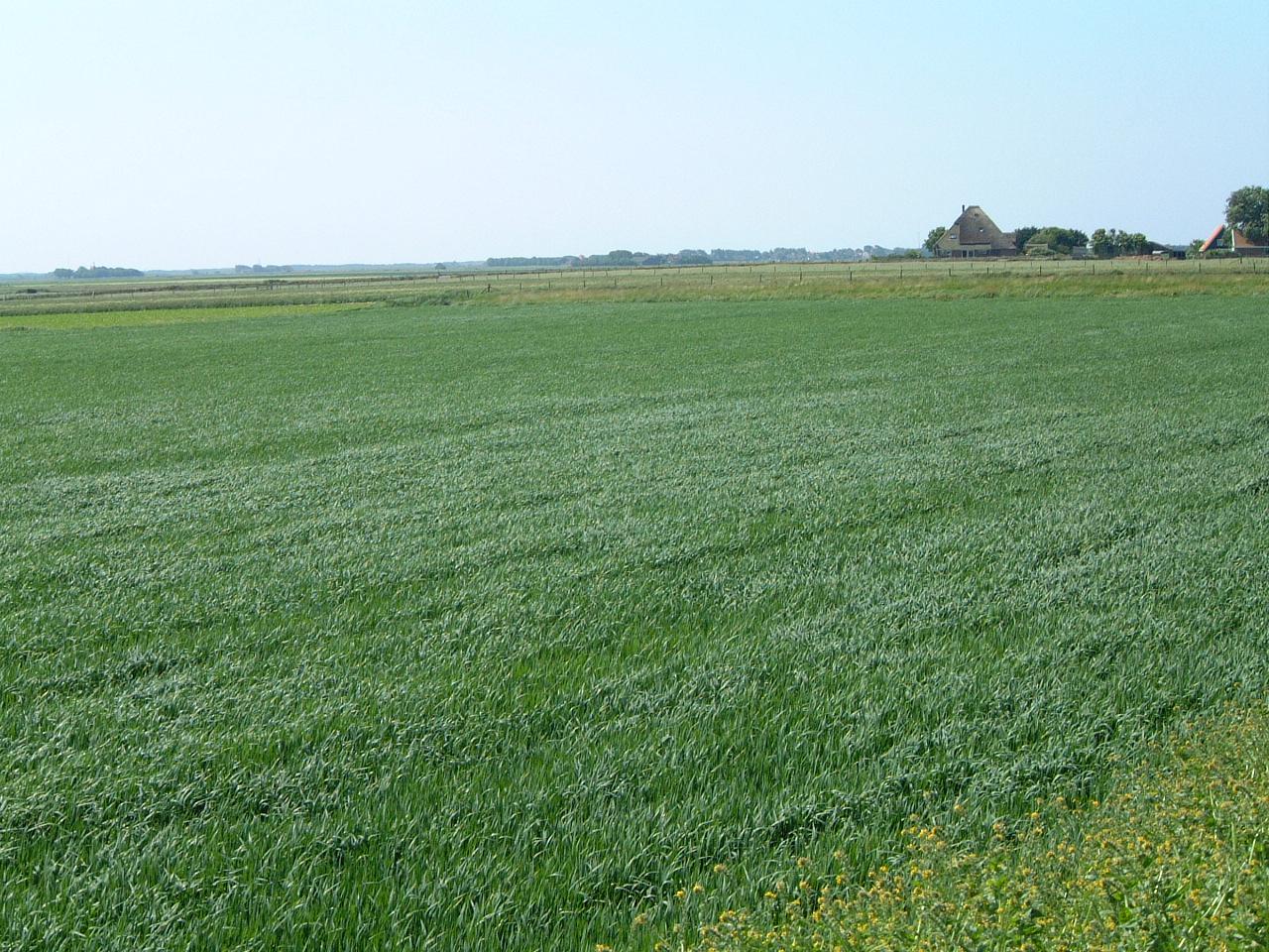 maartent farmland meadow field grassland