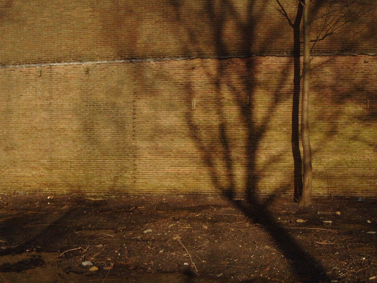 maartent wall brown bricks flat city inner