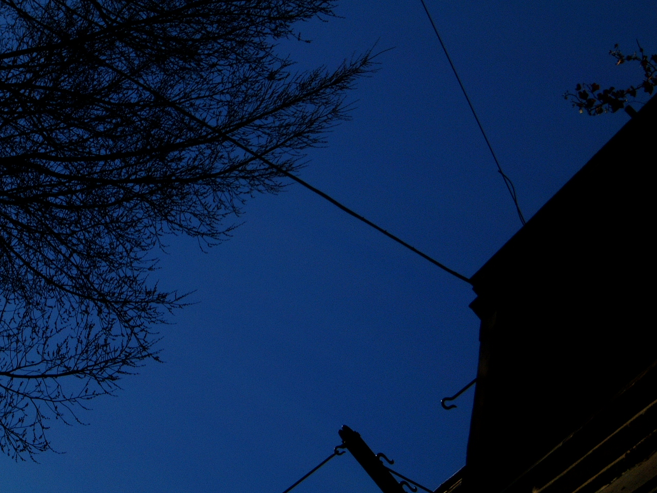 maartent architecture exteriors night amsterdam skyline tree silhouette house