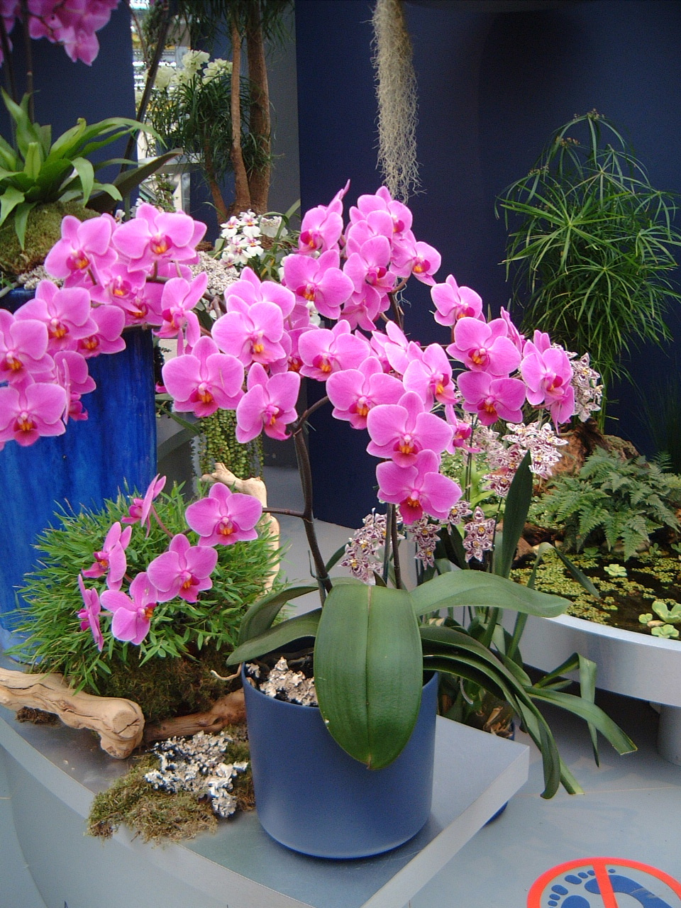 orchids pink plant flower potted maartent