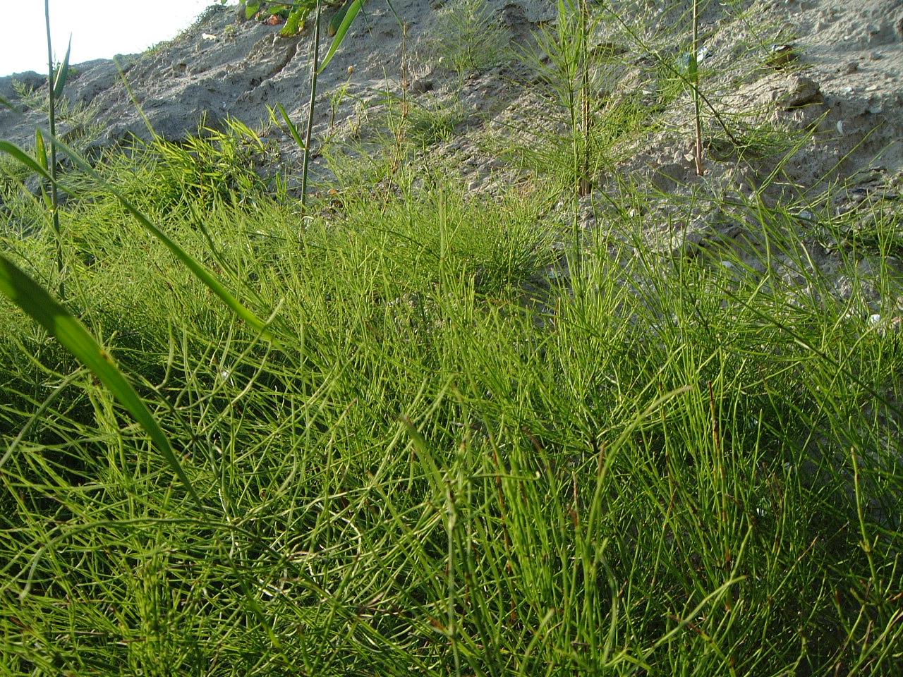 maartent dunes grass blades sand