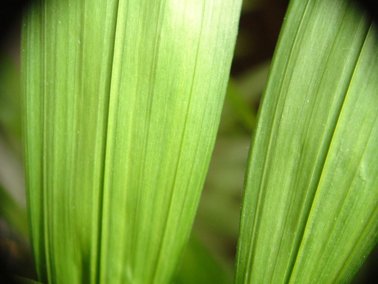 maartent leaves closeup green veines