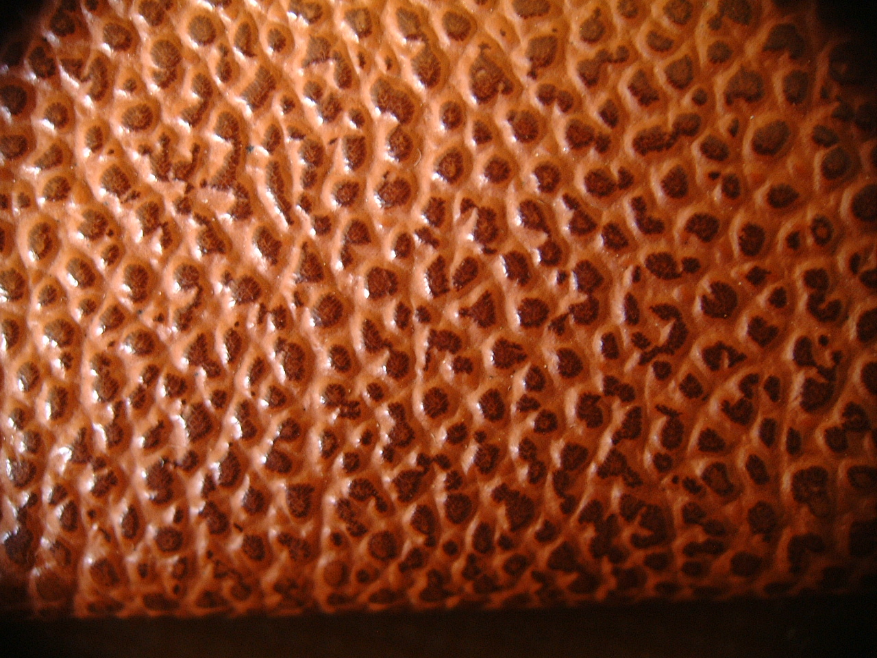 maartent closeup of leather brown skin