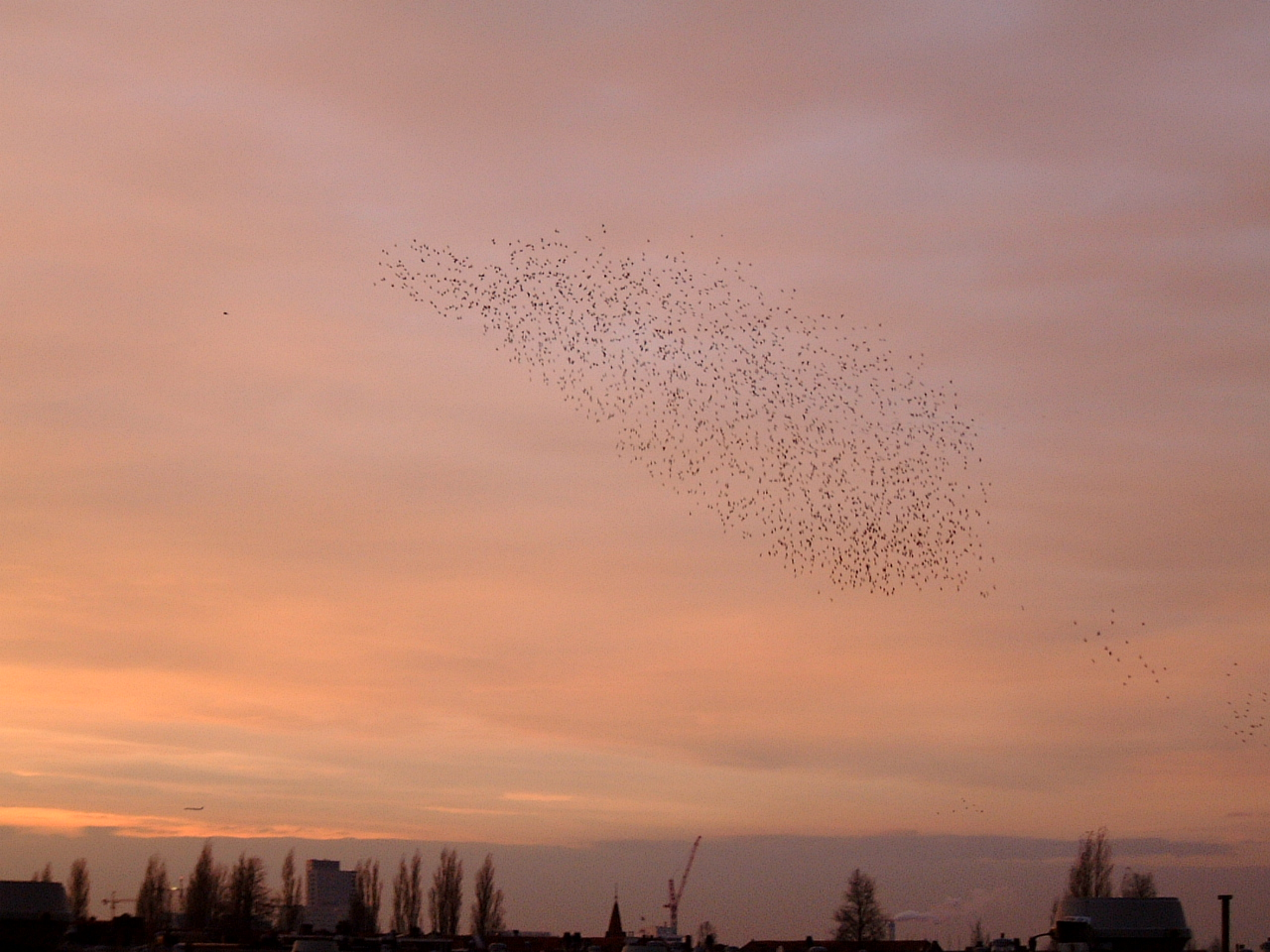 flock of birds migrating evening sky orange