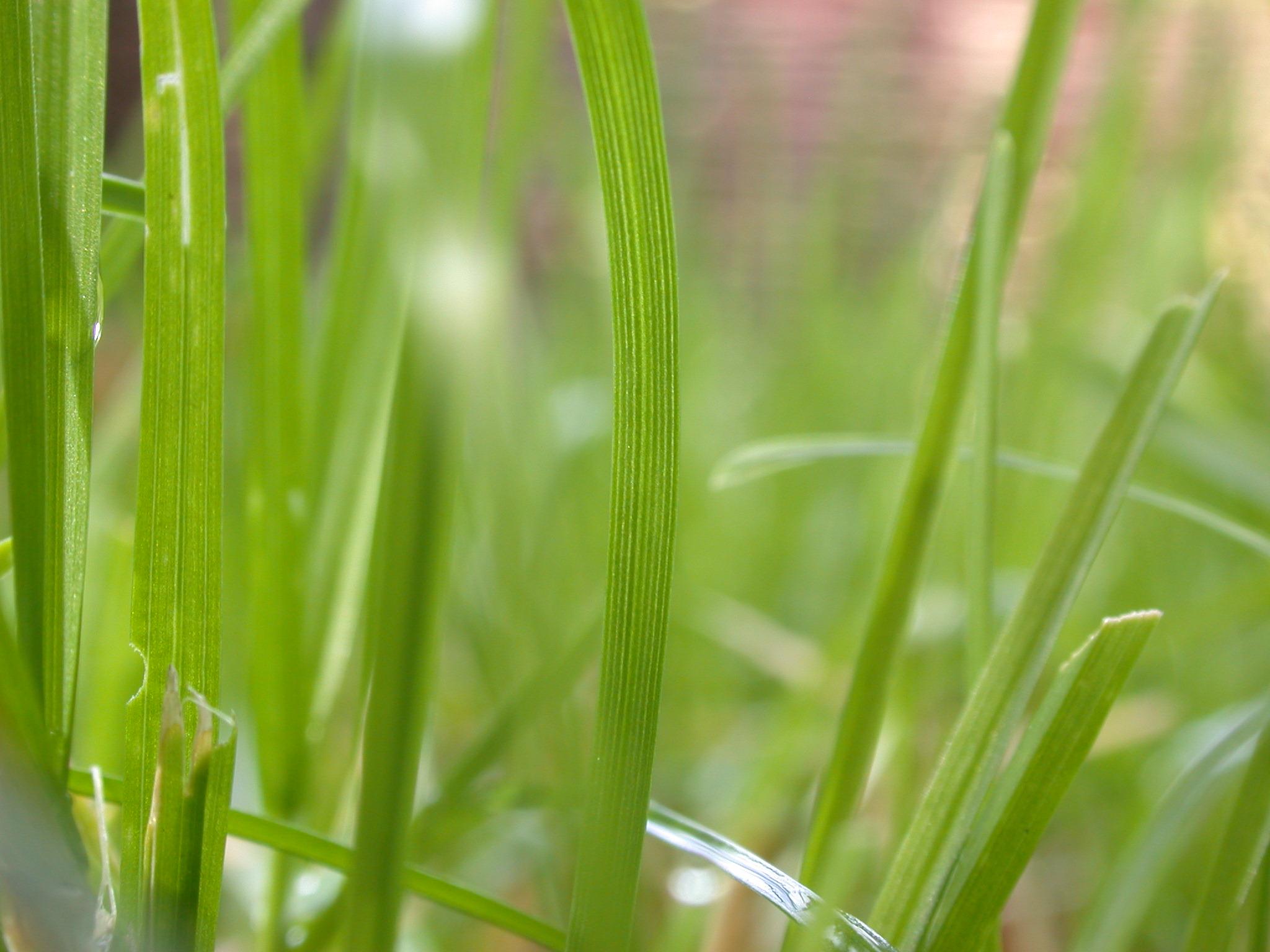 marceladmiraal blade blades of grass green closeup royalty free