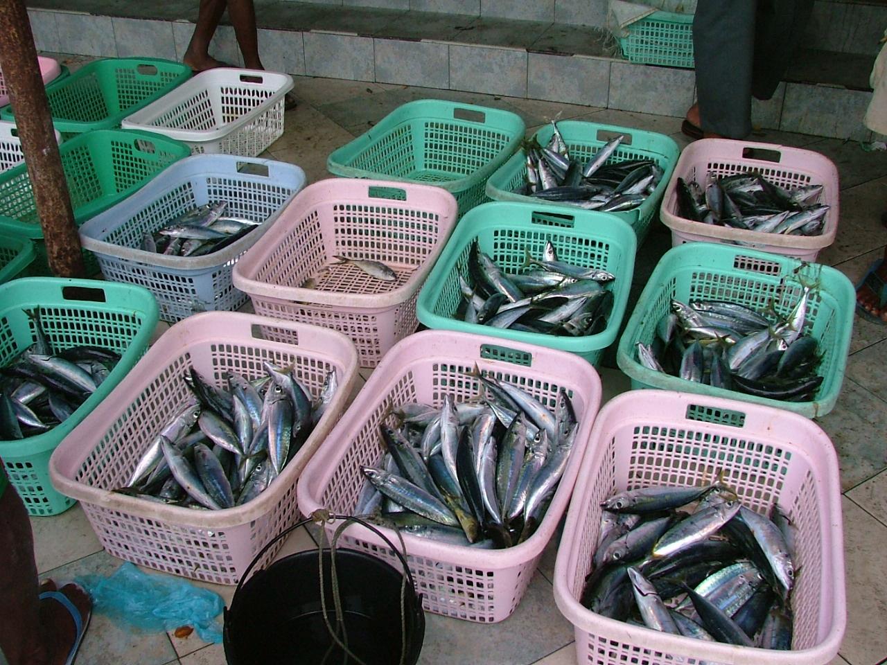 melvin fish fishmarket basket baskets nature food