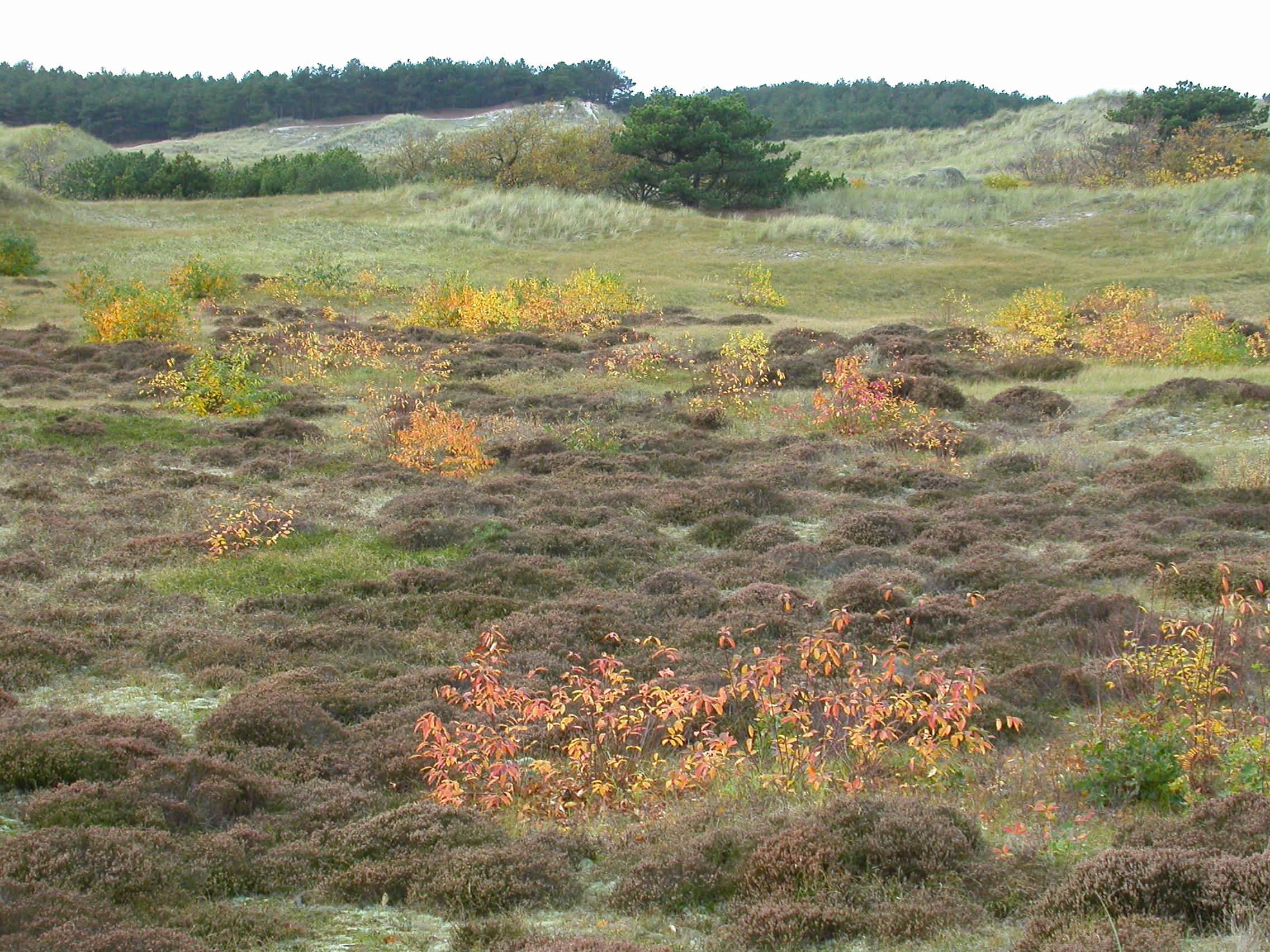 paul field rolling dune dunes grass autumn fall brown green