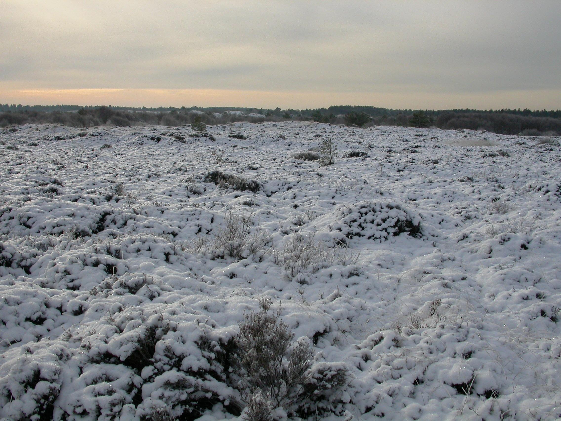 paul snowy dunes in schoorl the netherlands forest coast