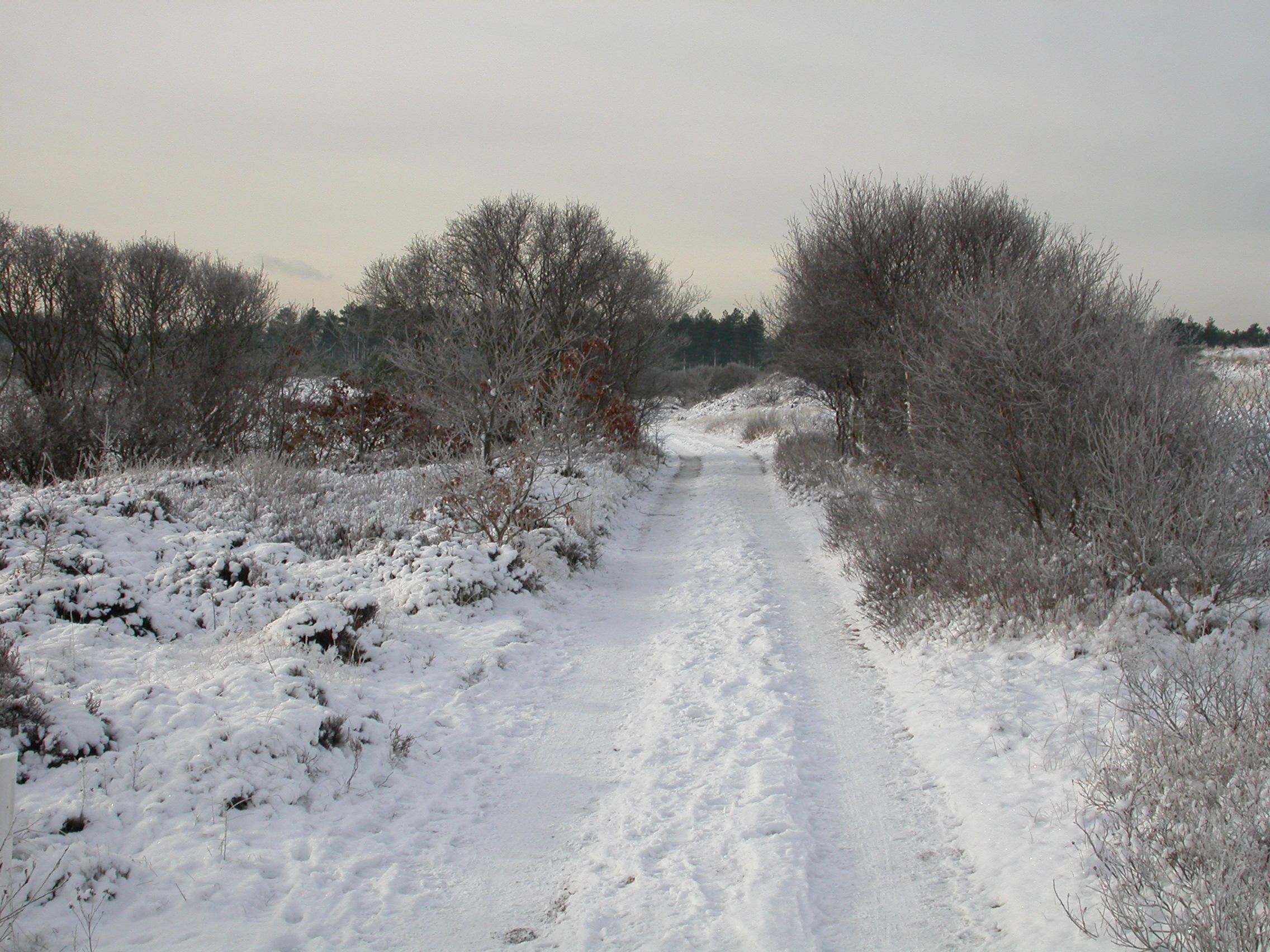 paul winter landscape snow cold frost winter dunes schoorl the netherlands