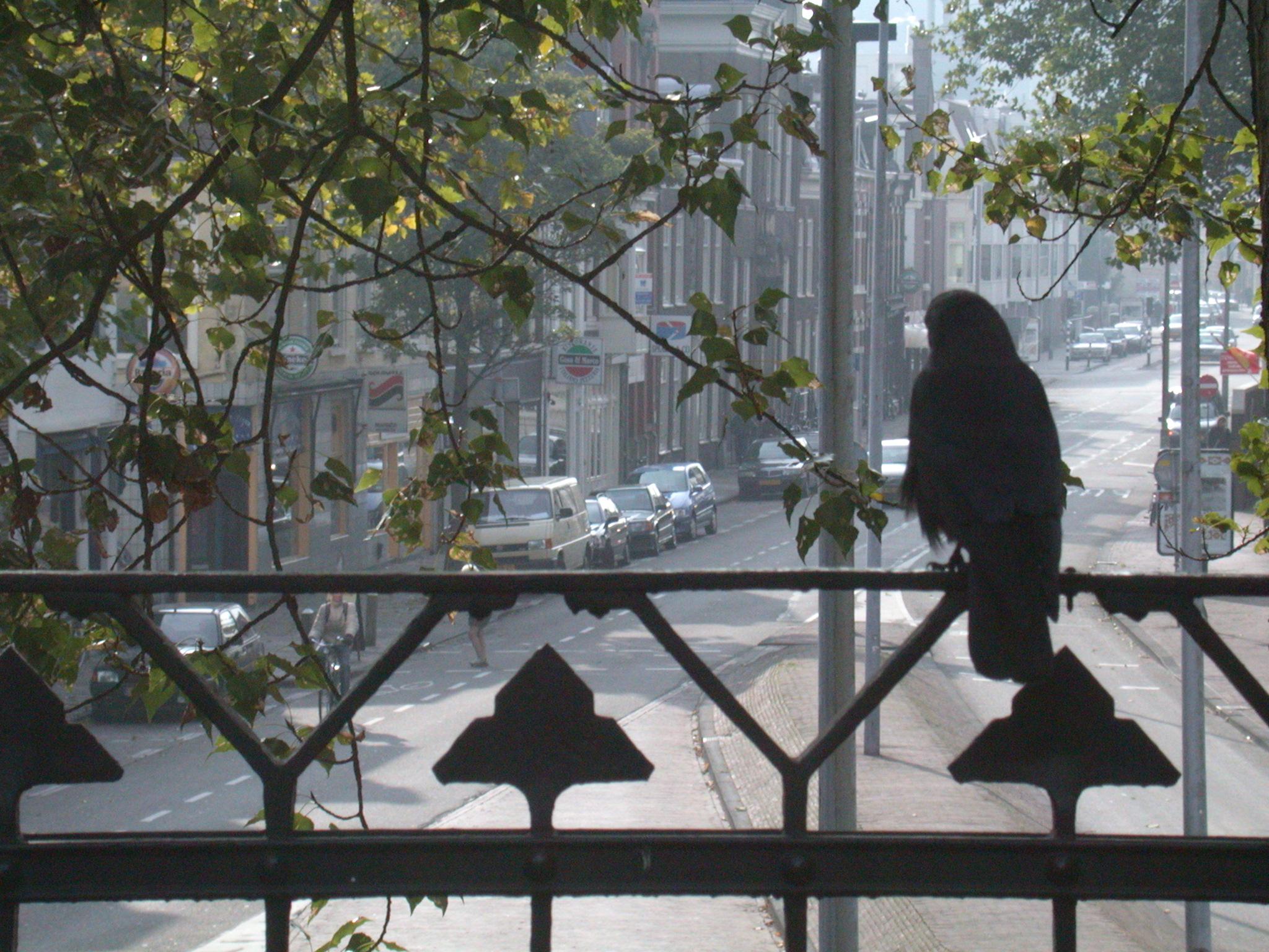 bird on a balcony balck street view