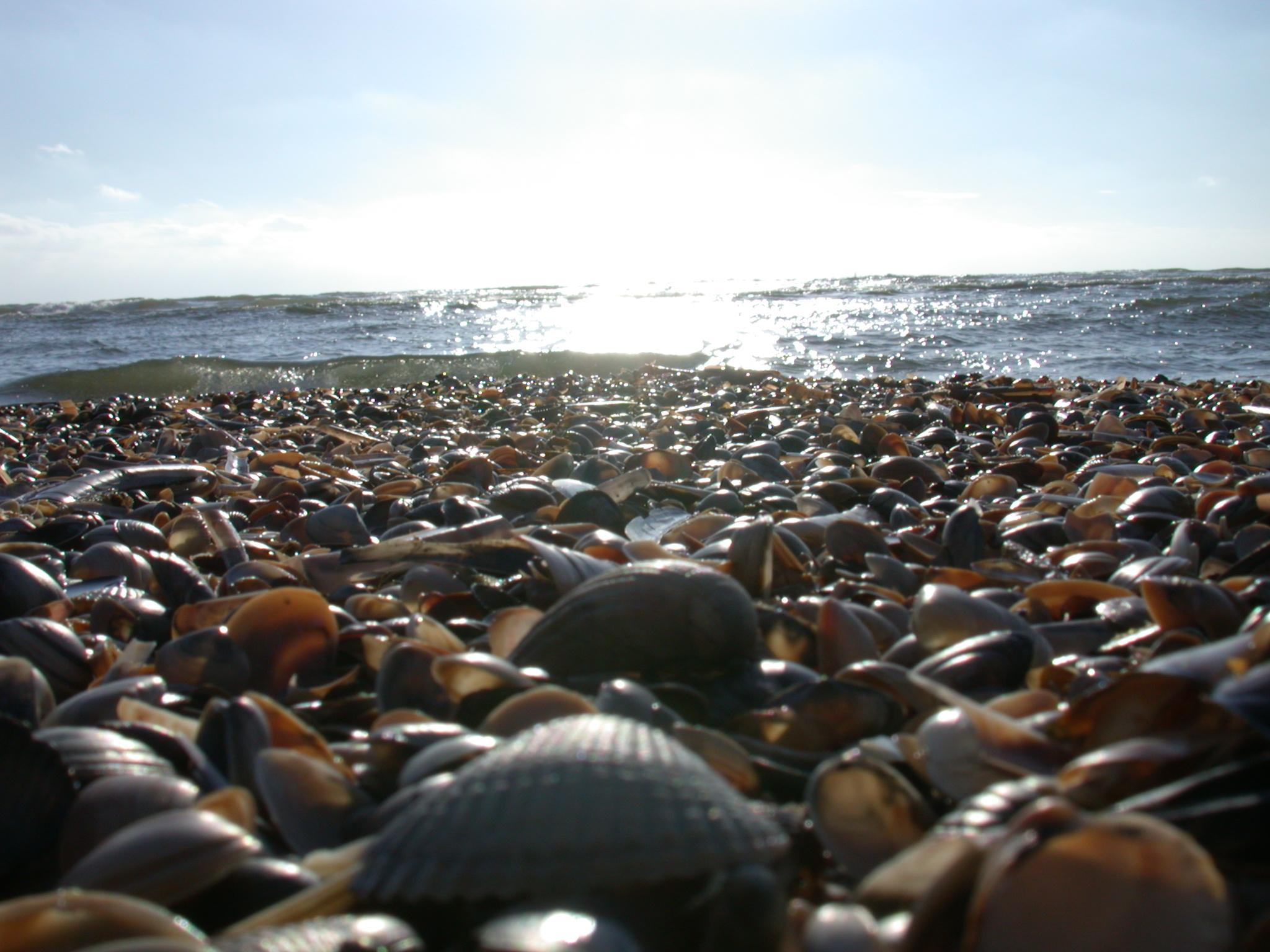 shells on beach ocean sun wet shore