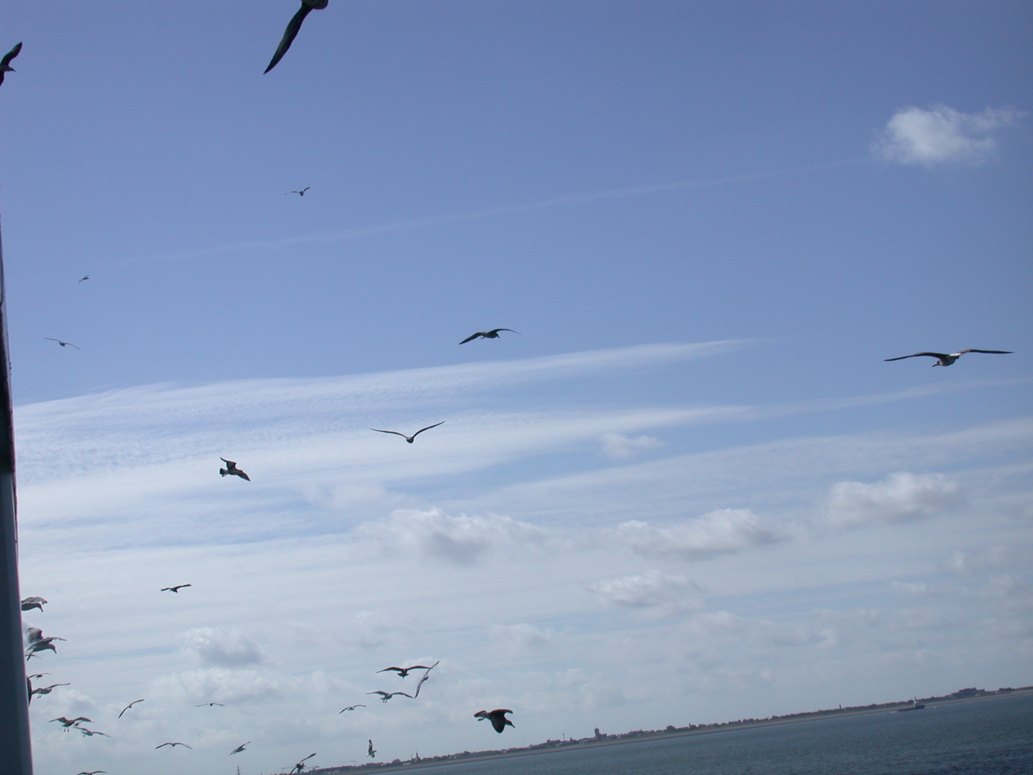 bird birds flock of seagull seagulls boat flying free