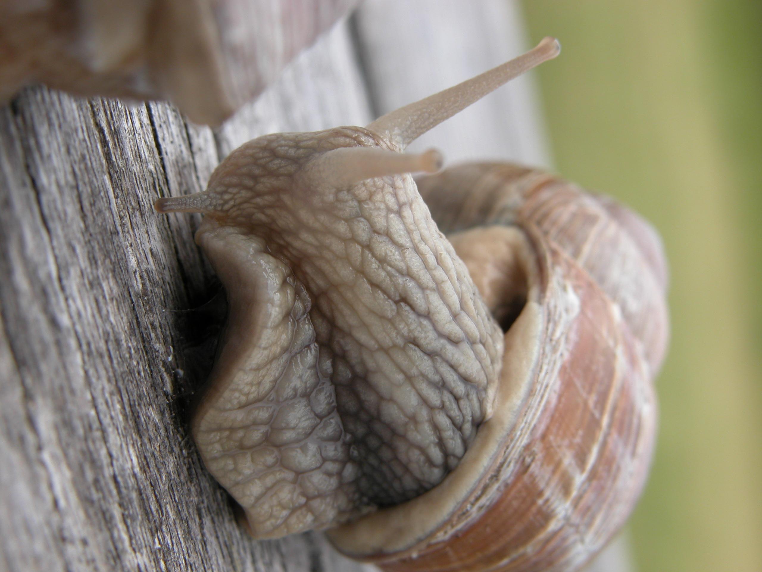 snail slug glistening slimey hard soft antennae slime shell