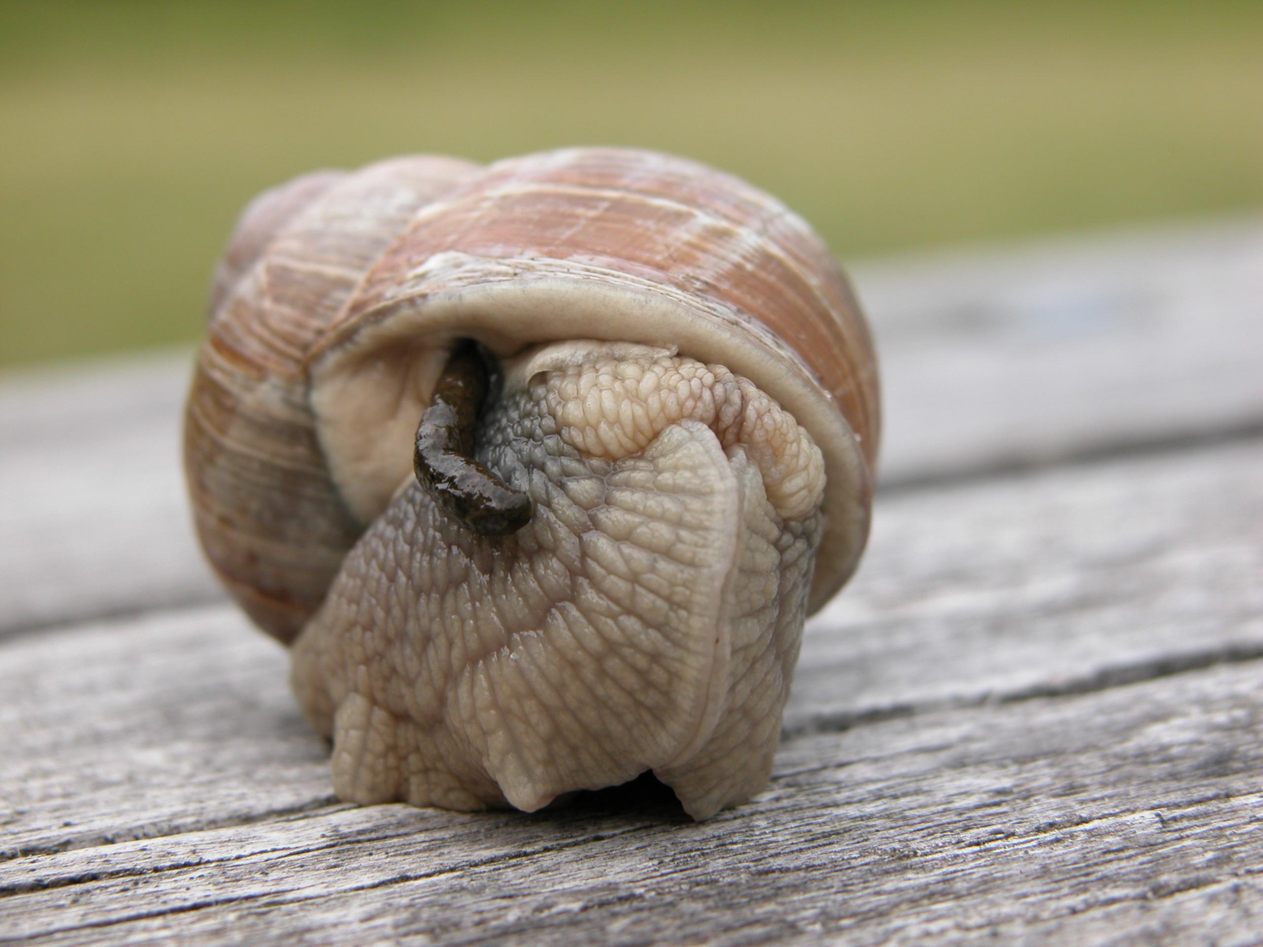snail insect invertebrates slime slow