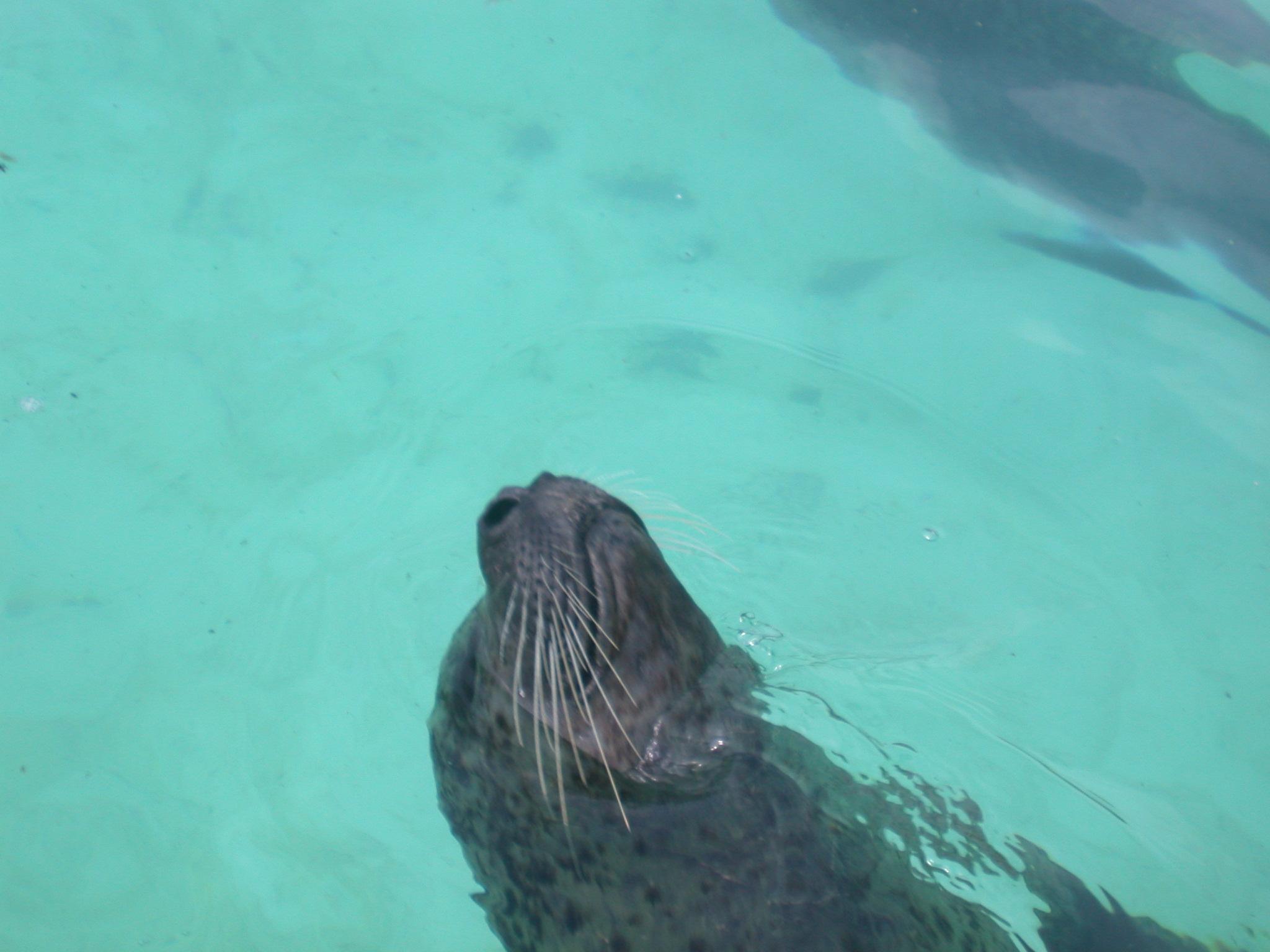 nature animals sea seal sanctuari