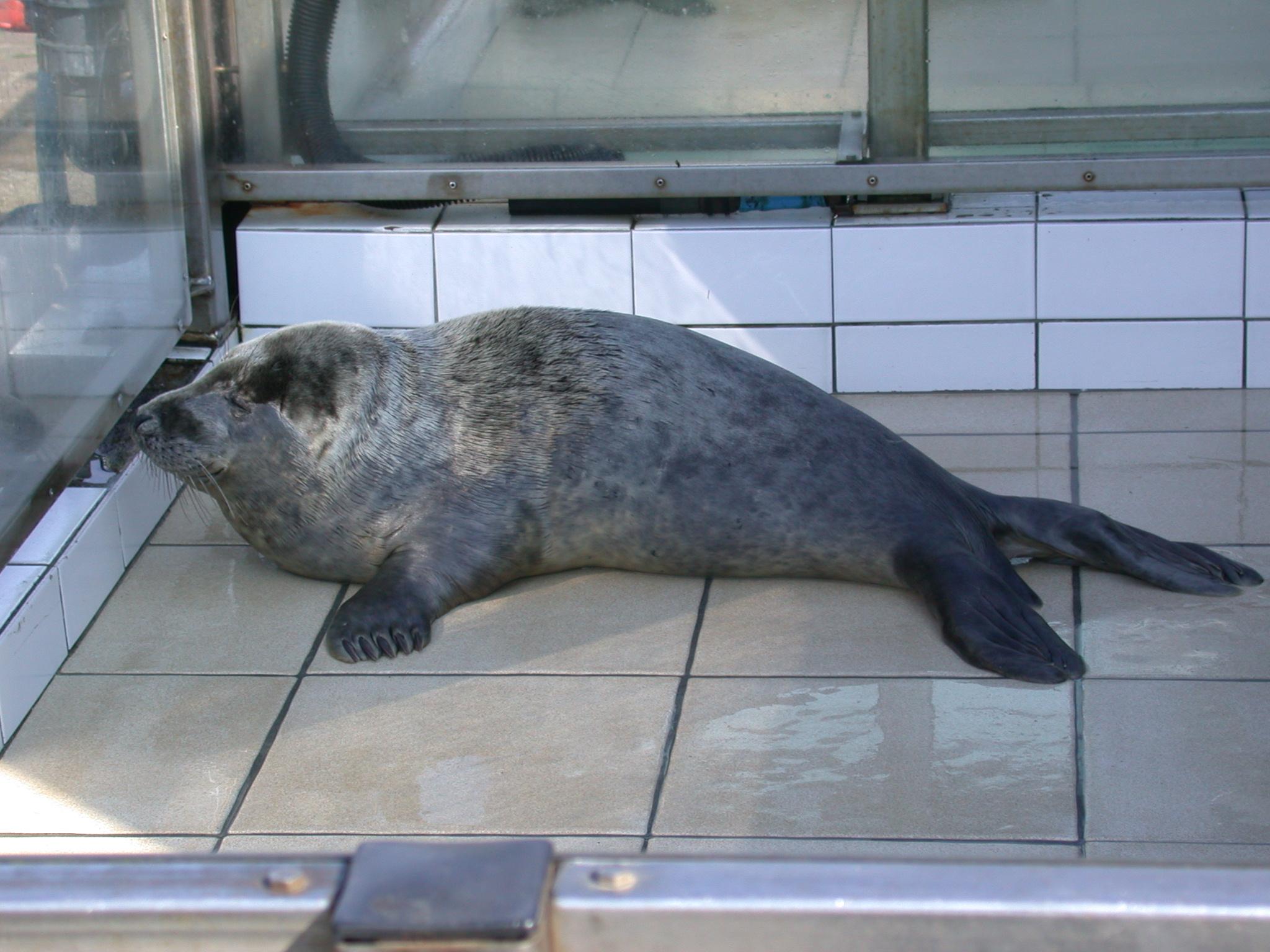 nature animals sea seal hospital ecomare young babyseal