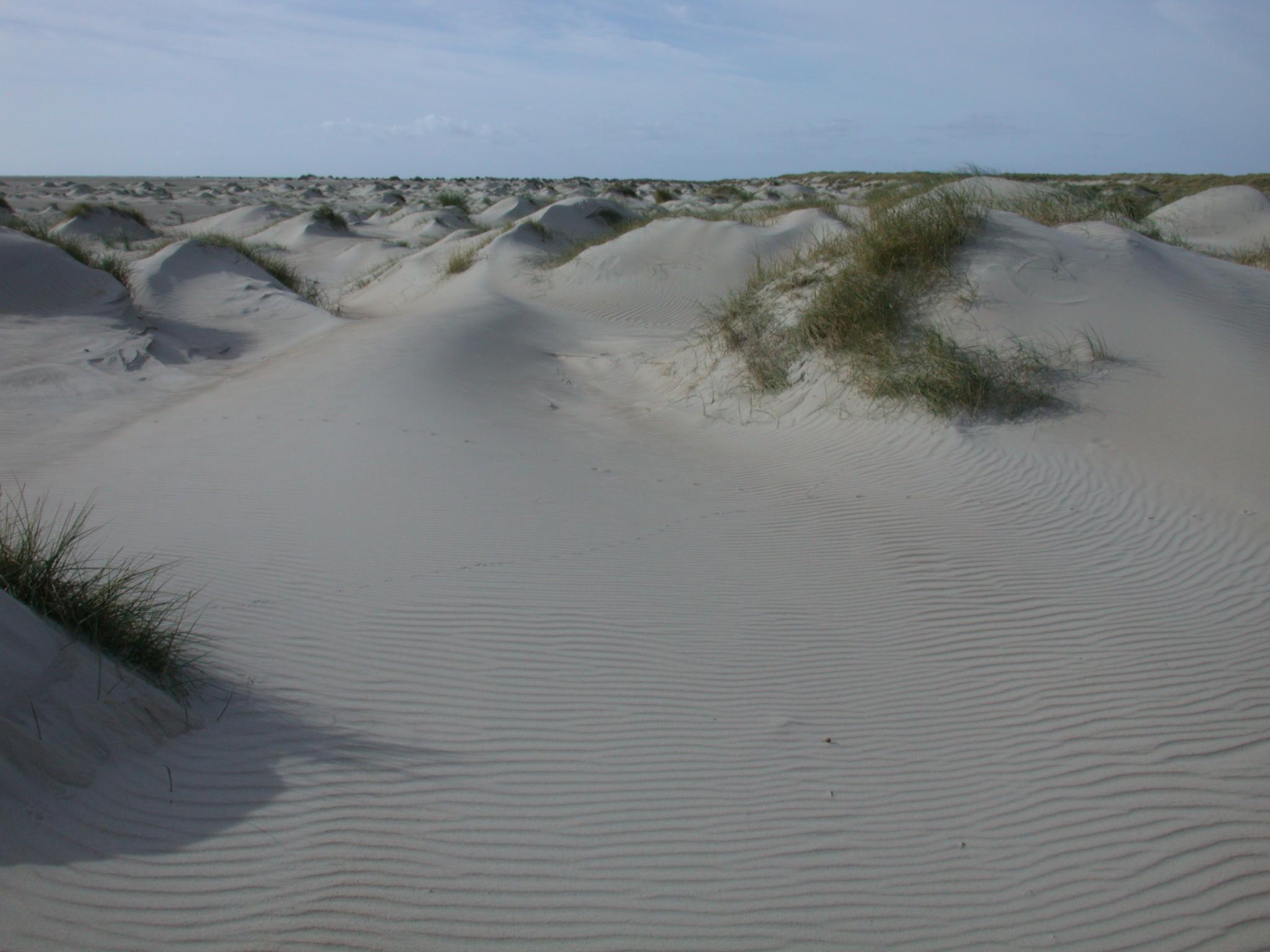 dune dunes sand sanddune sanddunes grass tuft tufts of royalty free