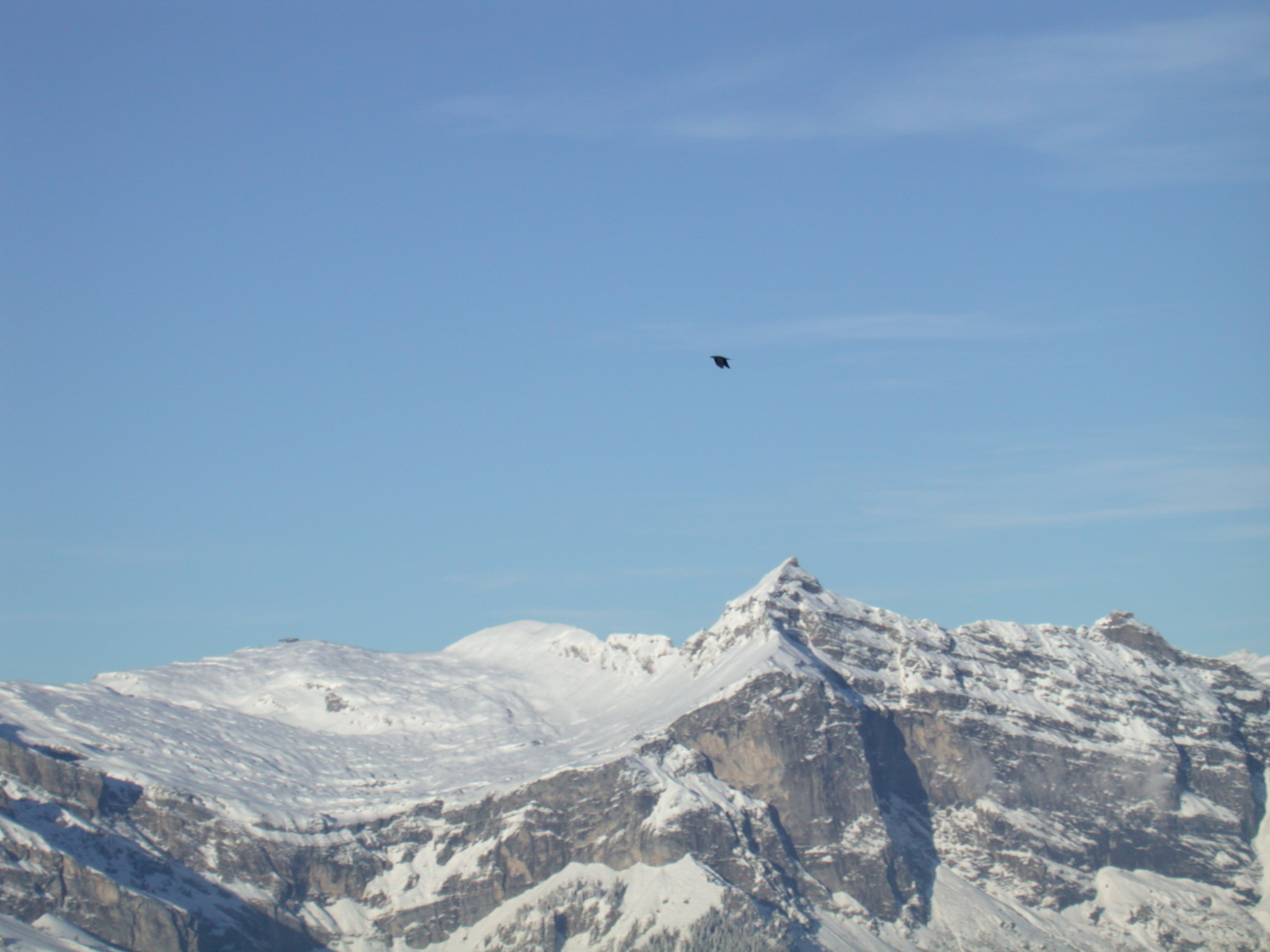nature landscapes mountain mountains snow as the crow flies alps