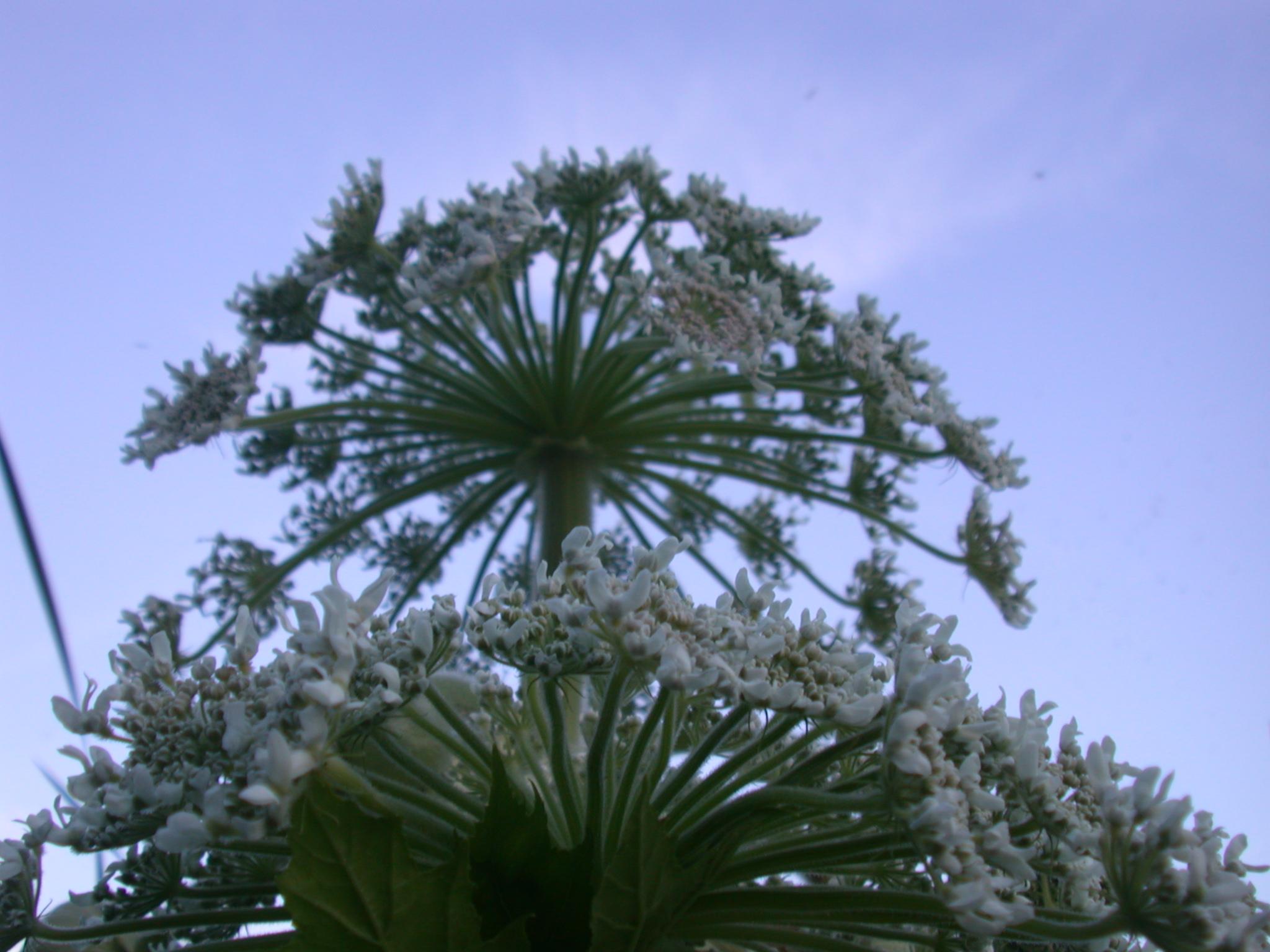 flower plant flowers white green
