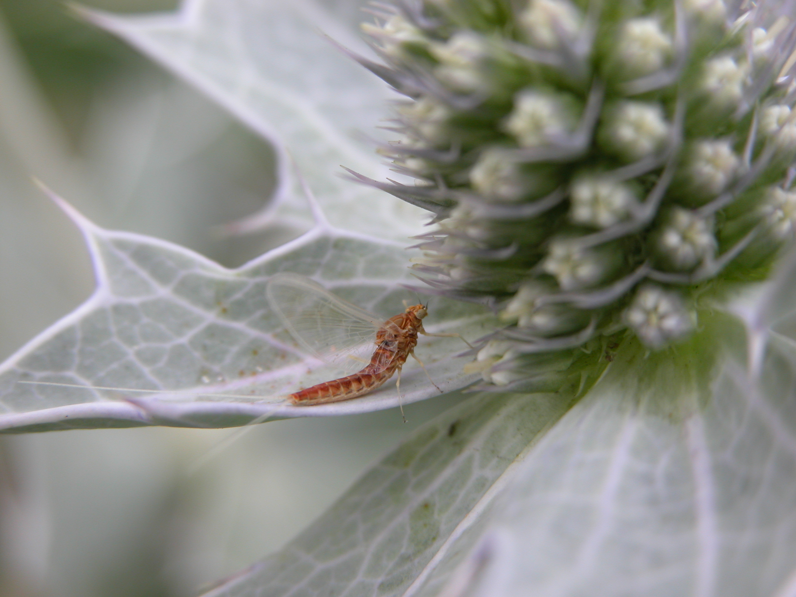 flying insect on a plant resting