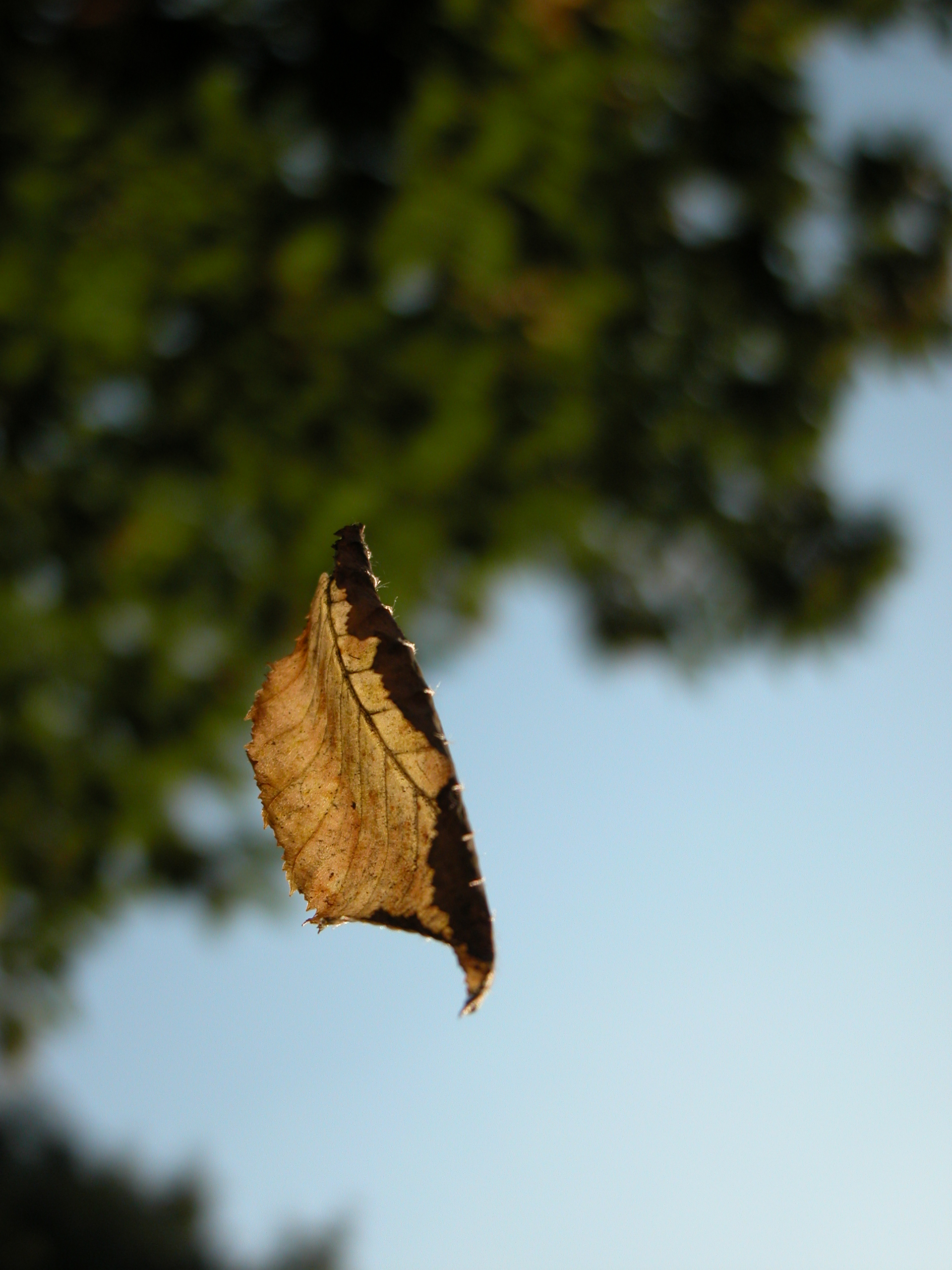 leaf hanging suspended in mid air by a spider silk wire
