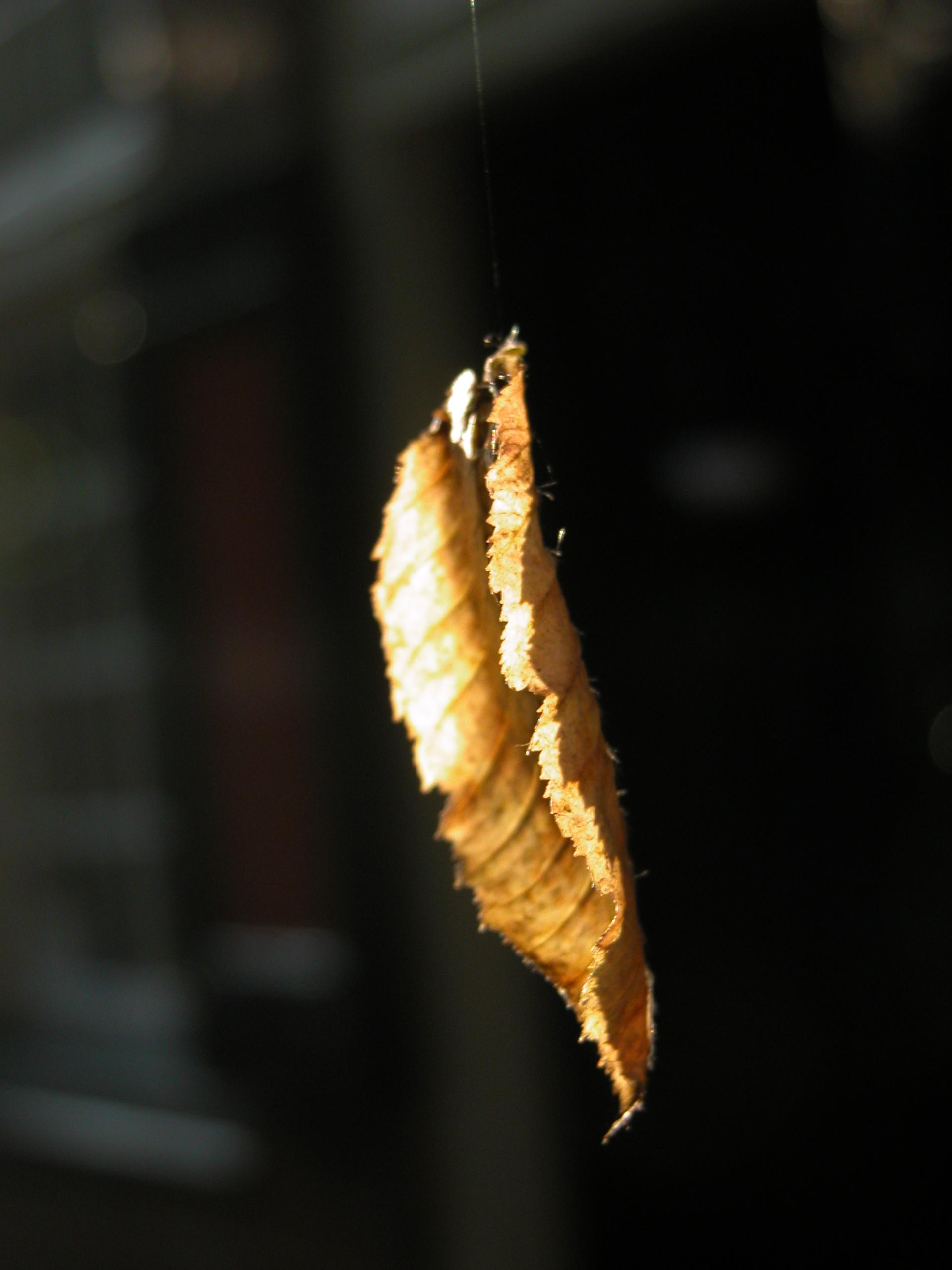 leaf suspended in air autumn