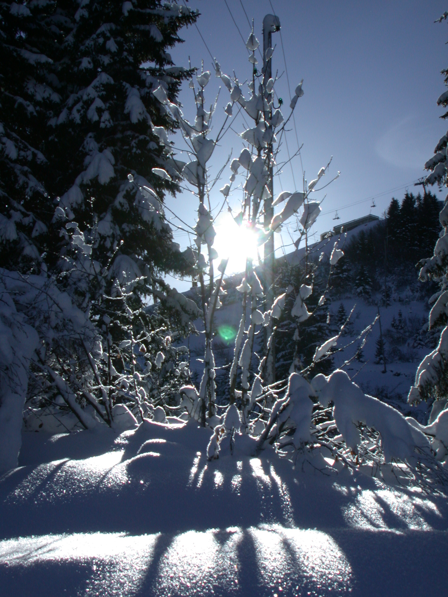 nature trees snow winter sun sunny silhouette hires