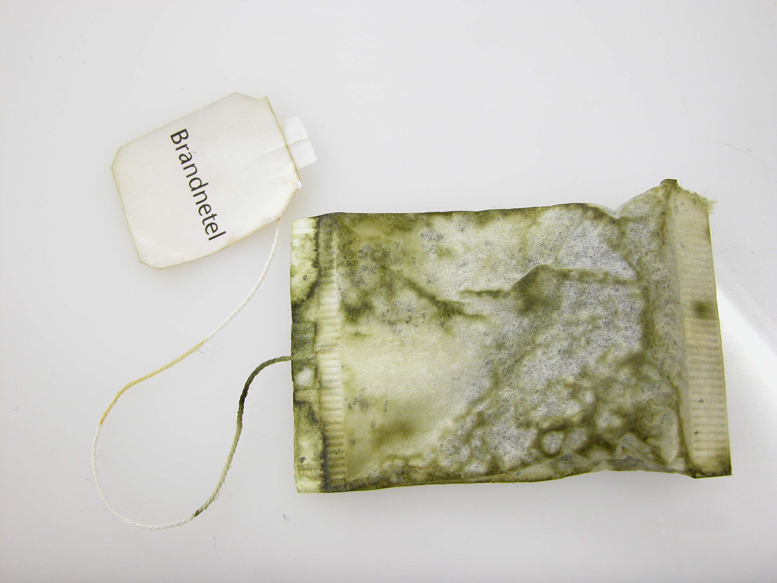 thea bag with added fungus green thea with a twist