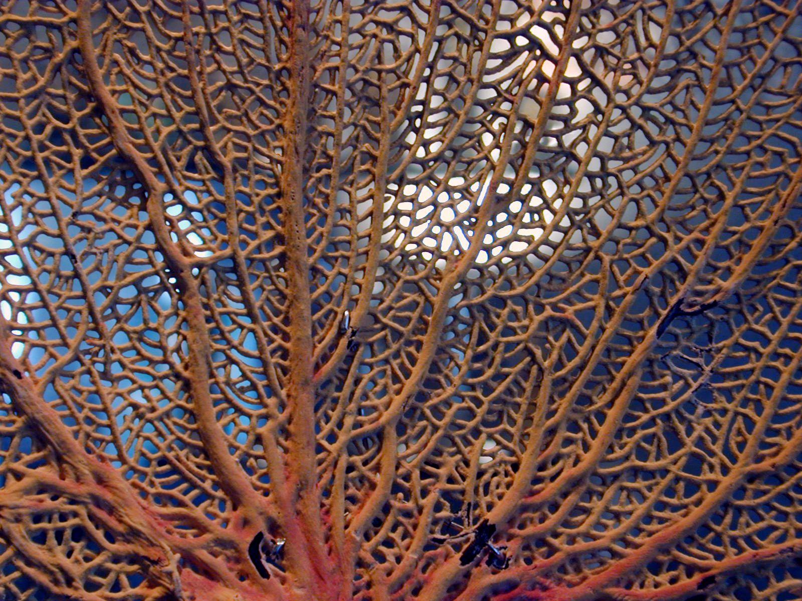 accountants coral springs florida