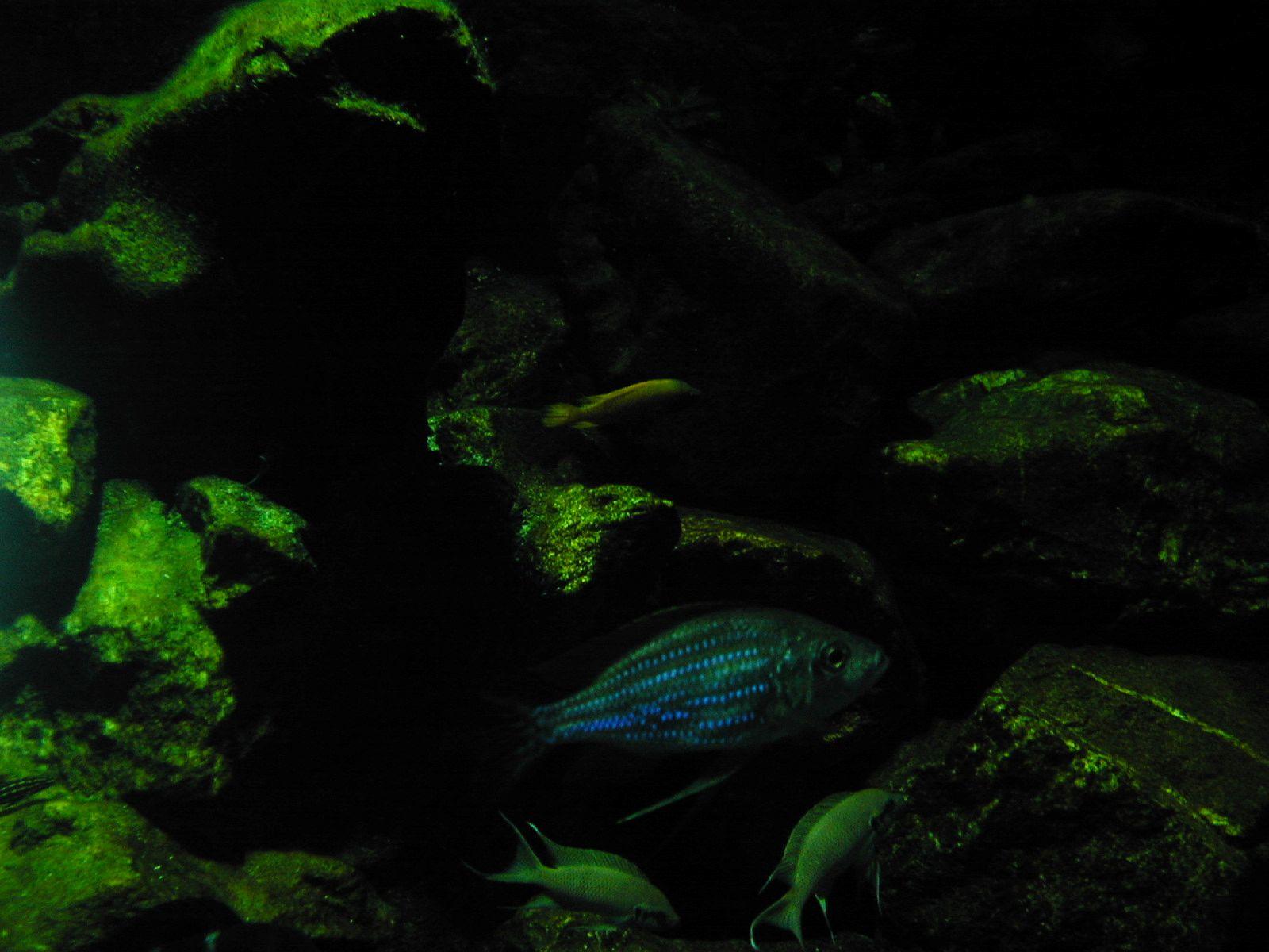 water plant fish under water dark