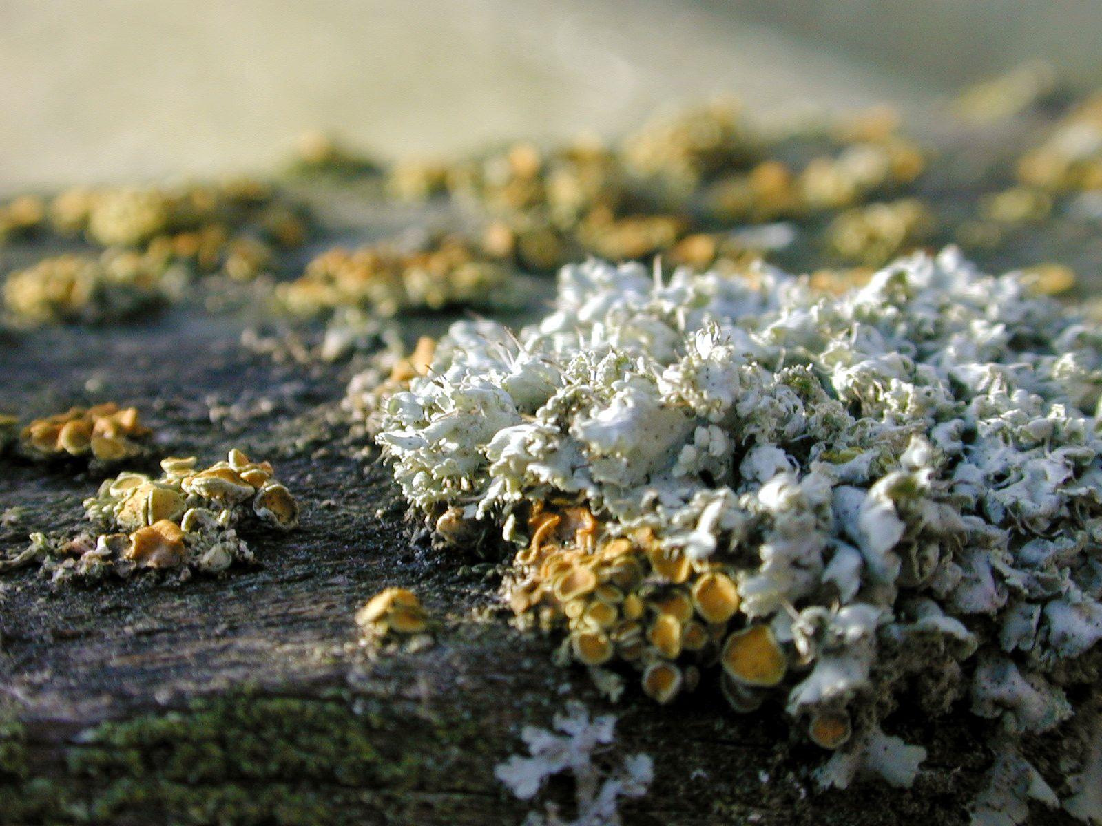 moss mosses ground growing fungus fungi undergrowth bark wood