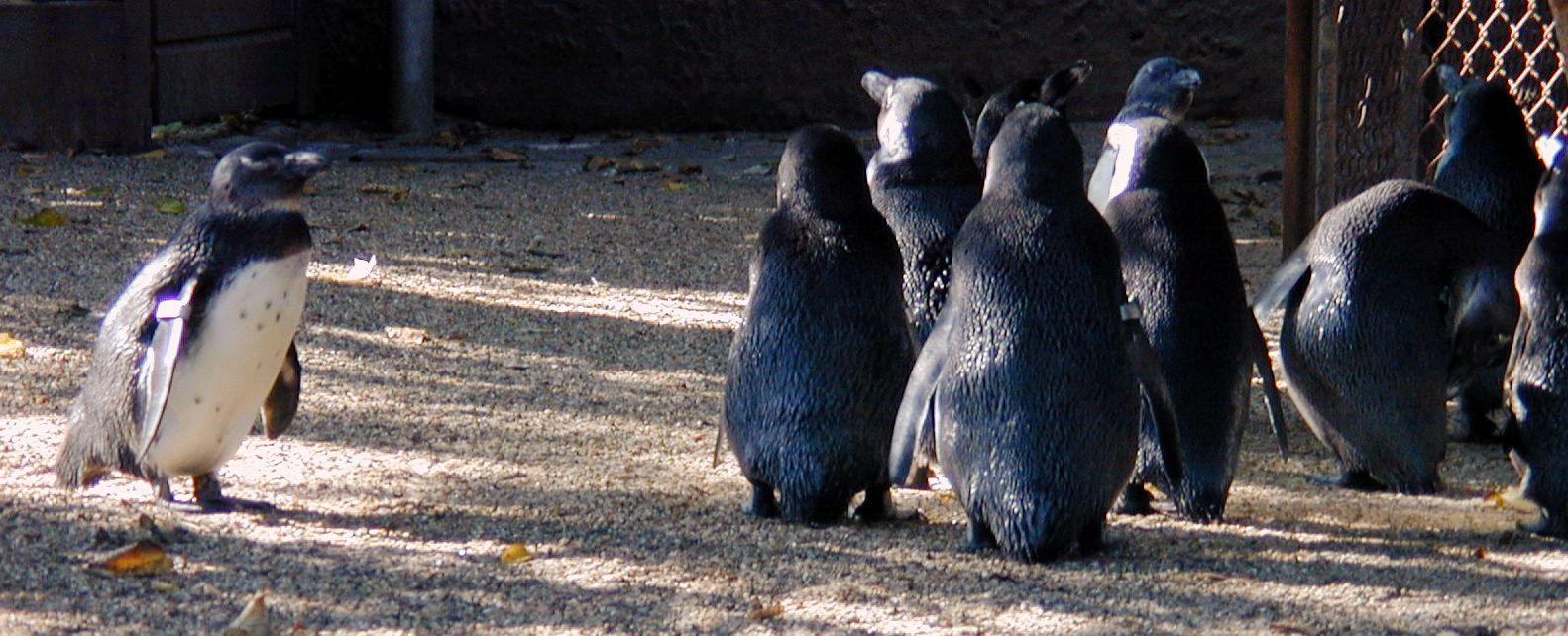 penguins group waiters together black white