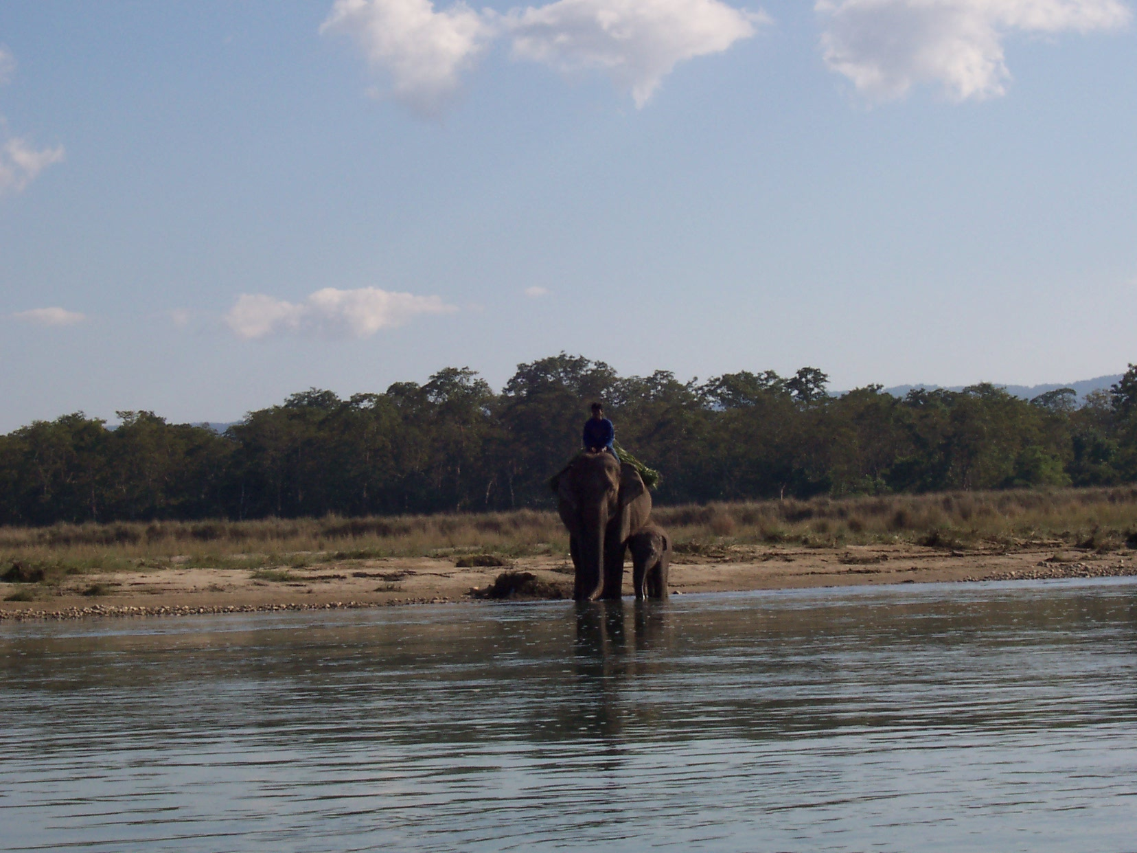 annet elephant with calf crossing the river