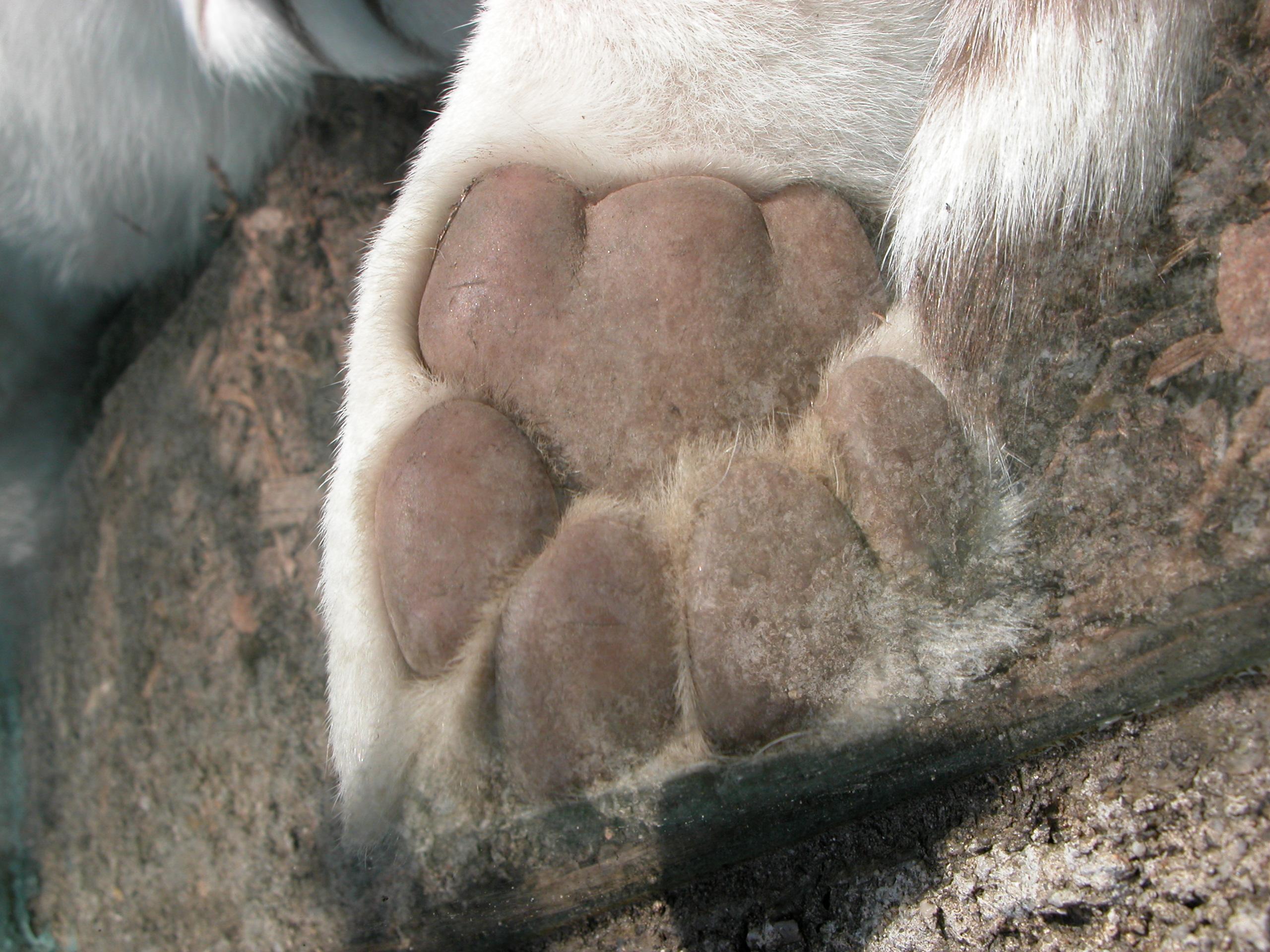 dog cat paw hair sole feet foot brown white fur
