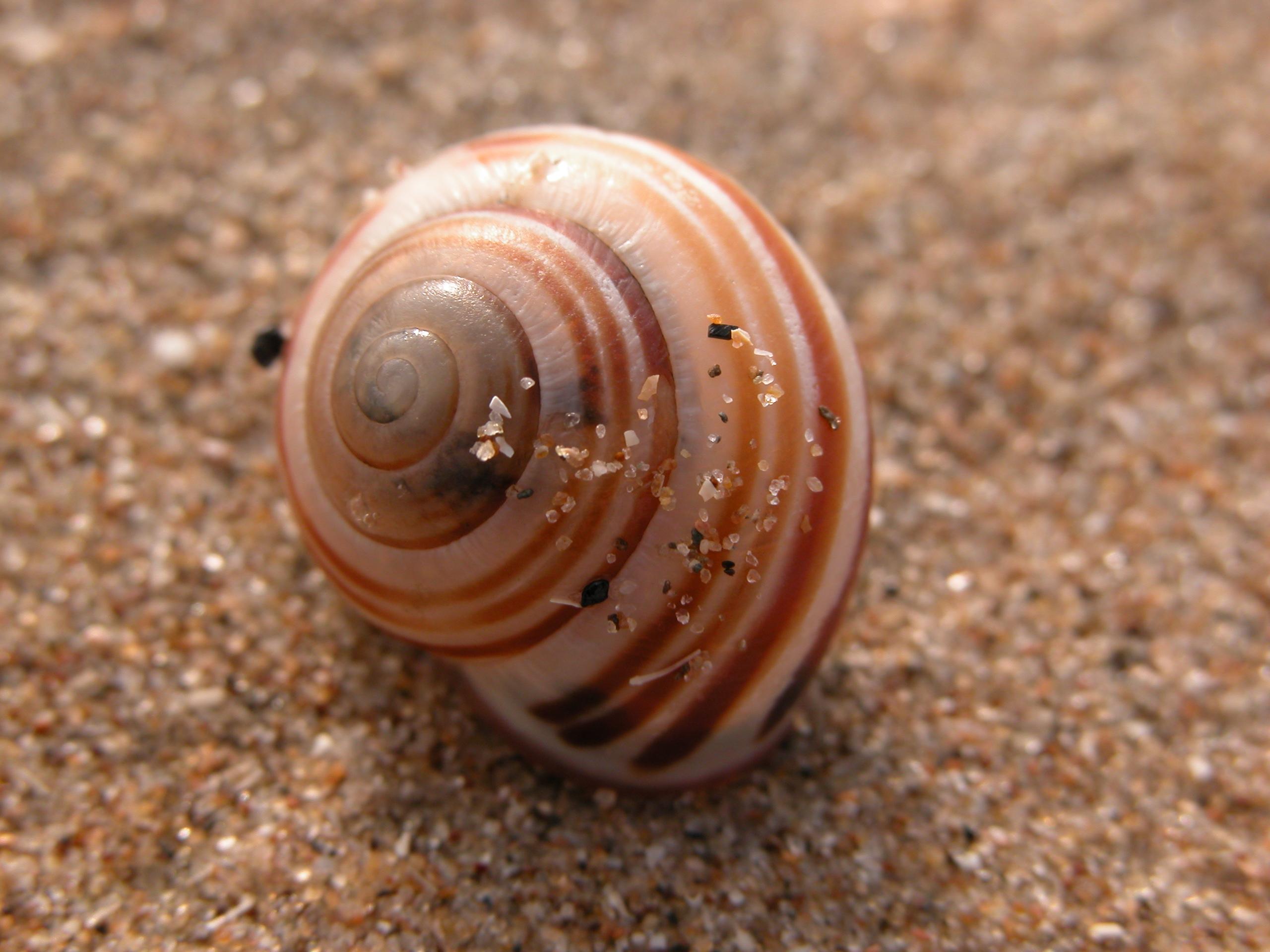 snail house sand slow