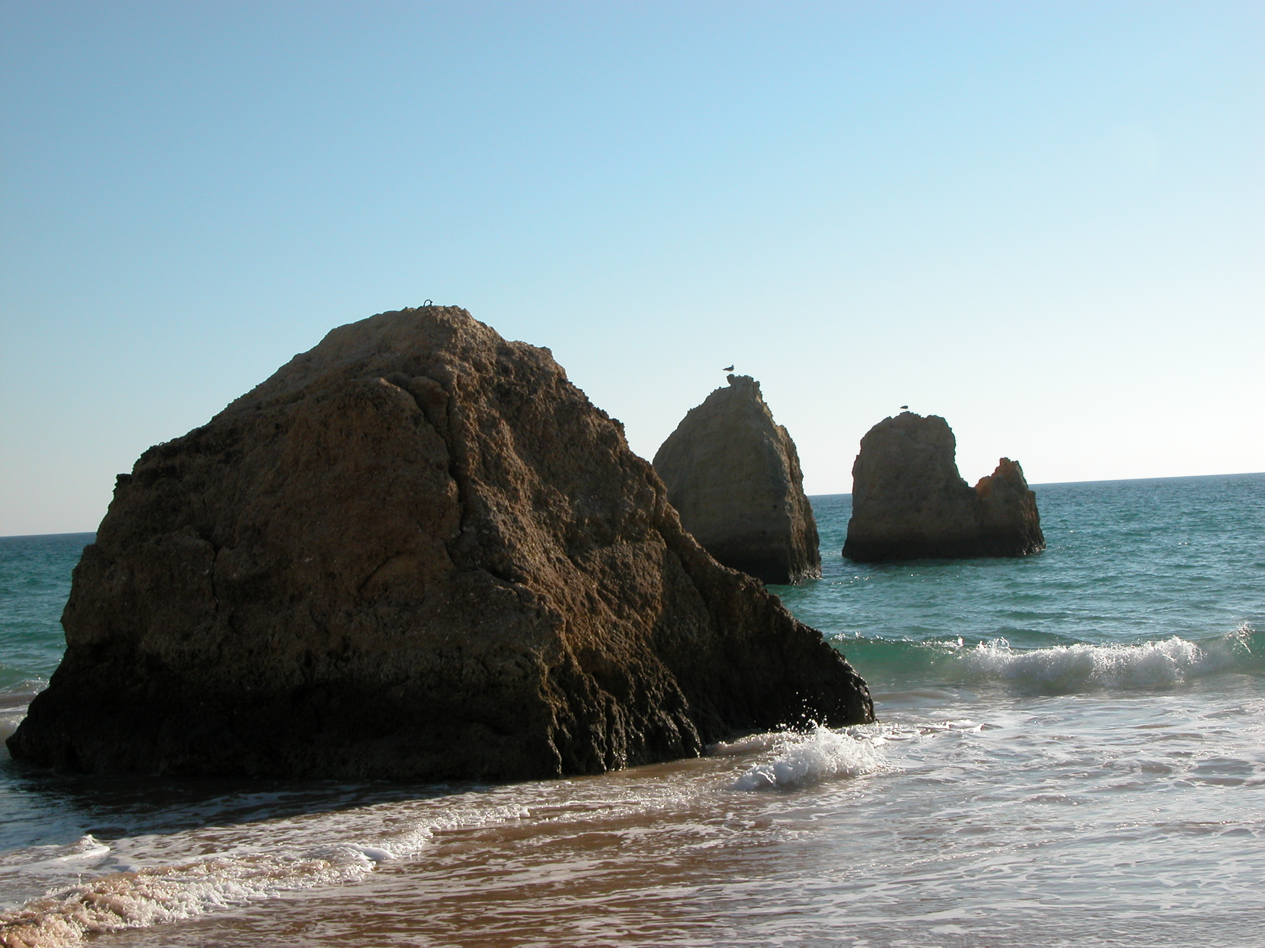 nature landscapes rockscapes rocks rock seascapes beachscapes water sea ocean gull animals birds waves