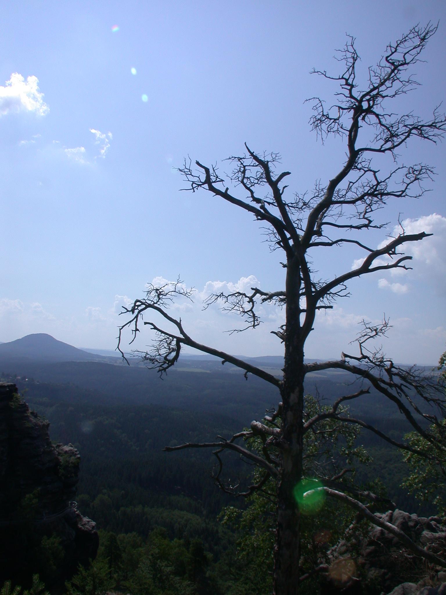 dead tree on cliff rocks mountain