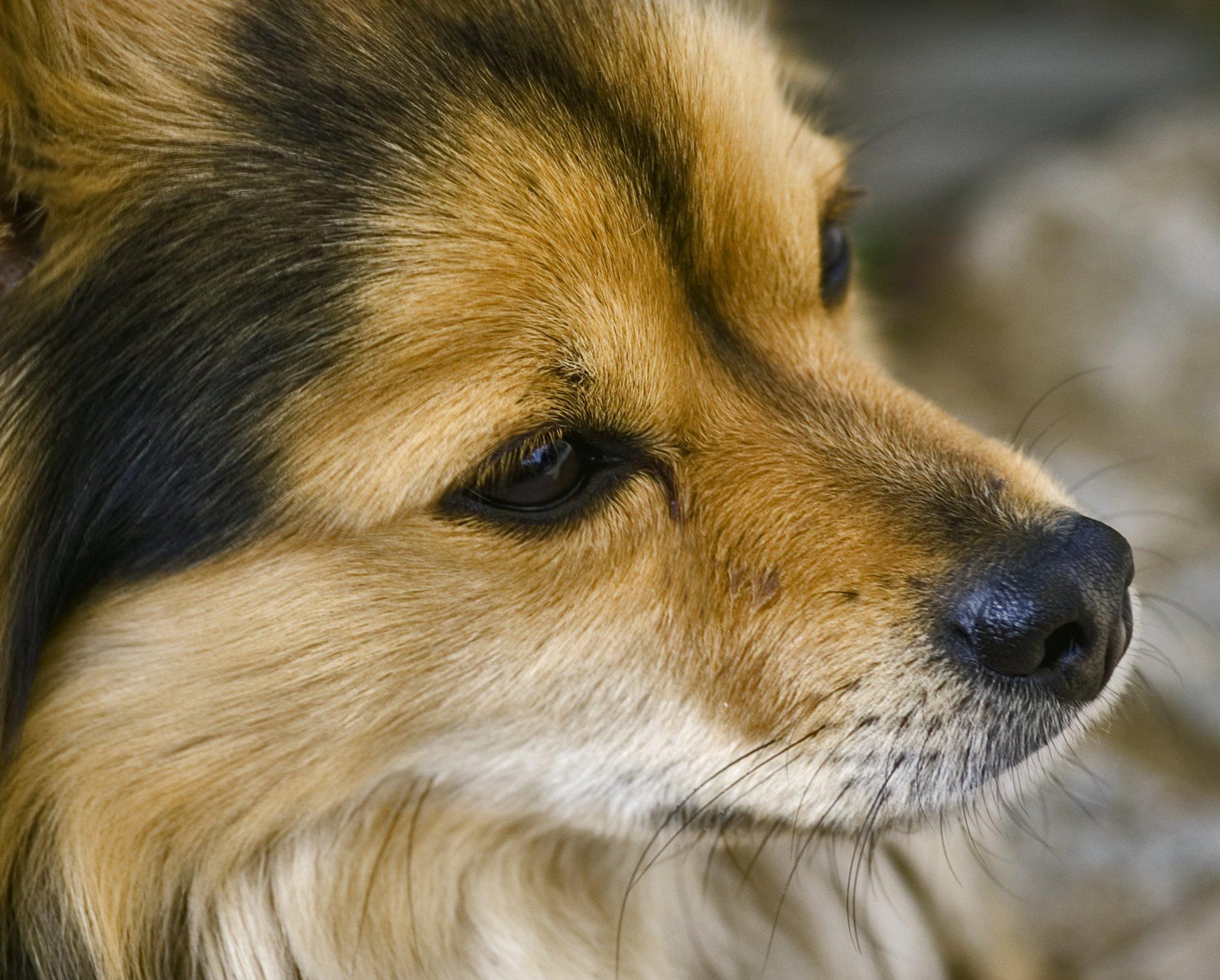 betina dog pet closeup