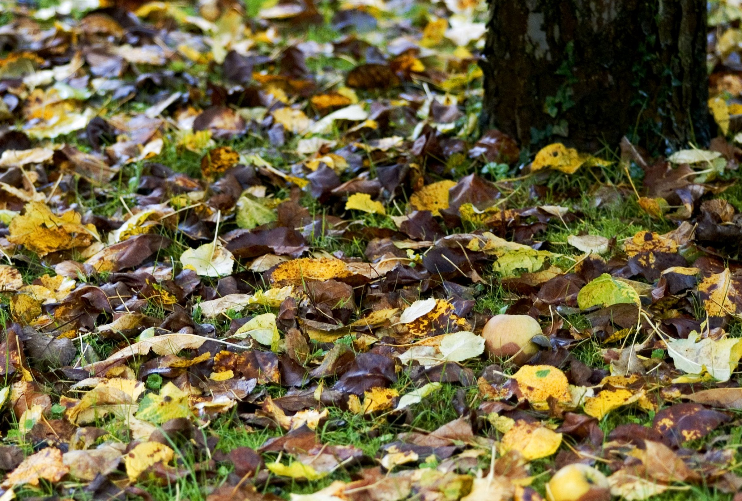 betina leafs on ground forest autumn yellow