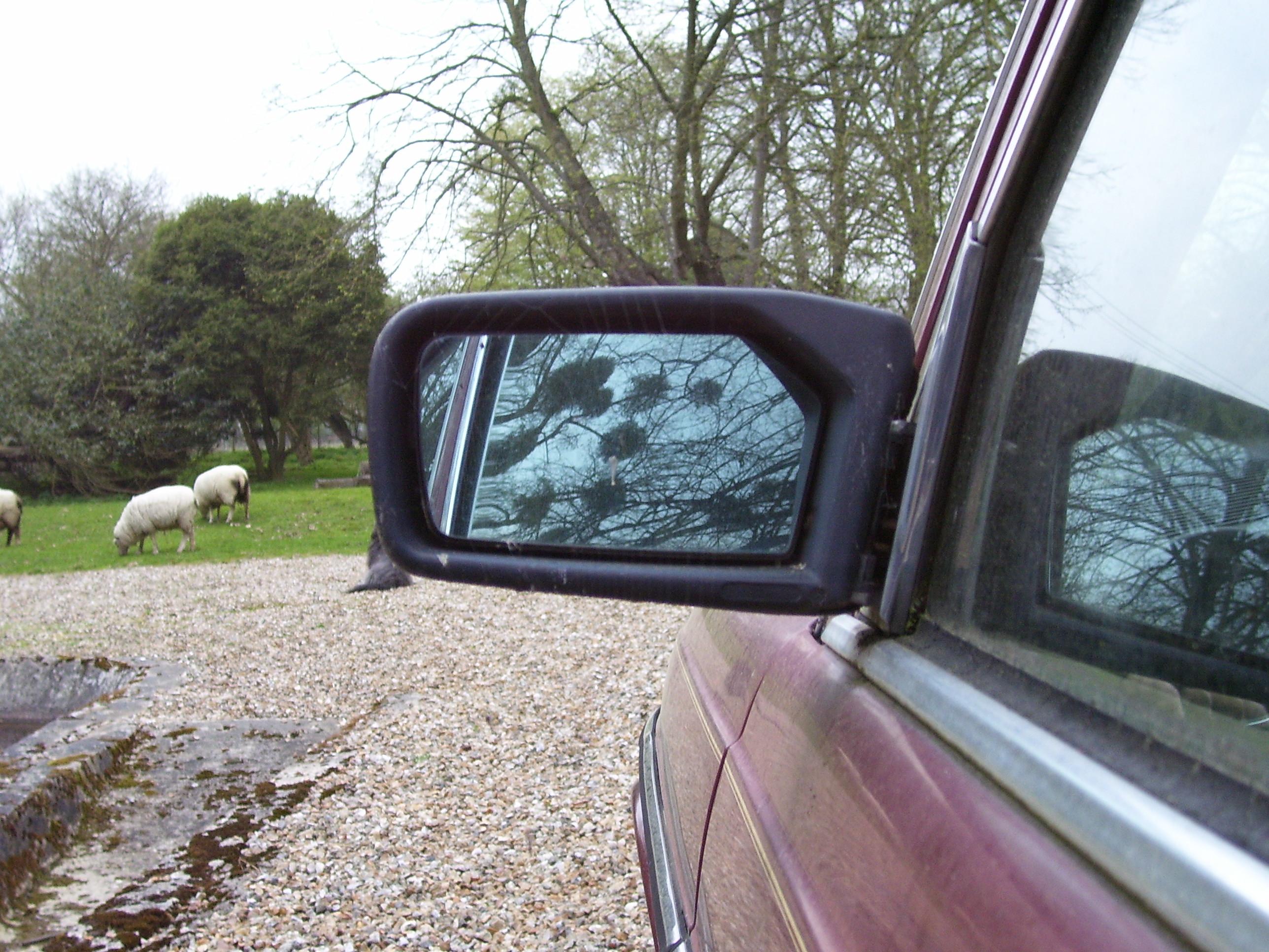 makkes car mirror glass sheep parked door