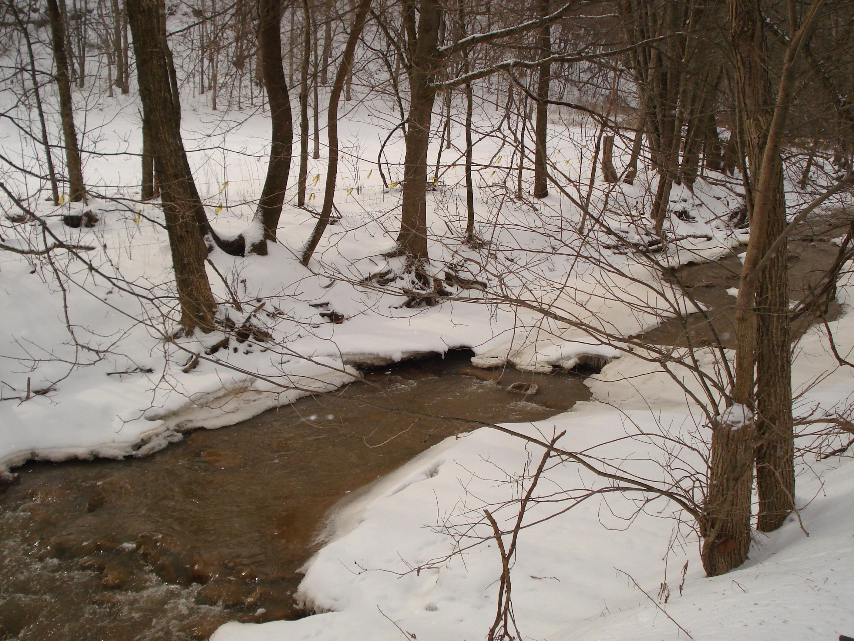 sallie_richardson forest winter creek brook snow blanket cold running water