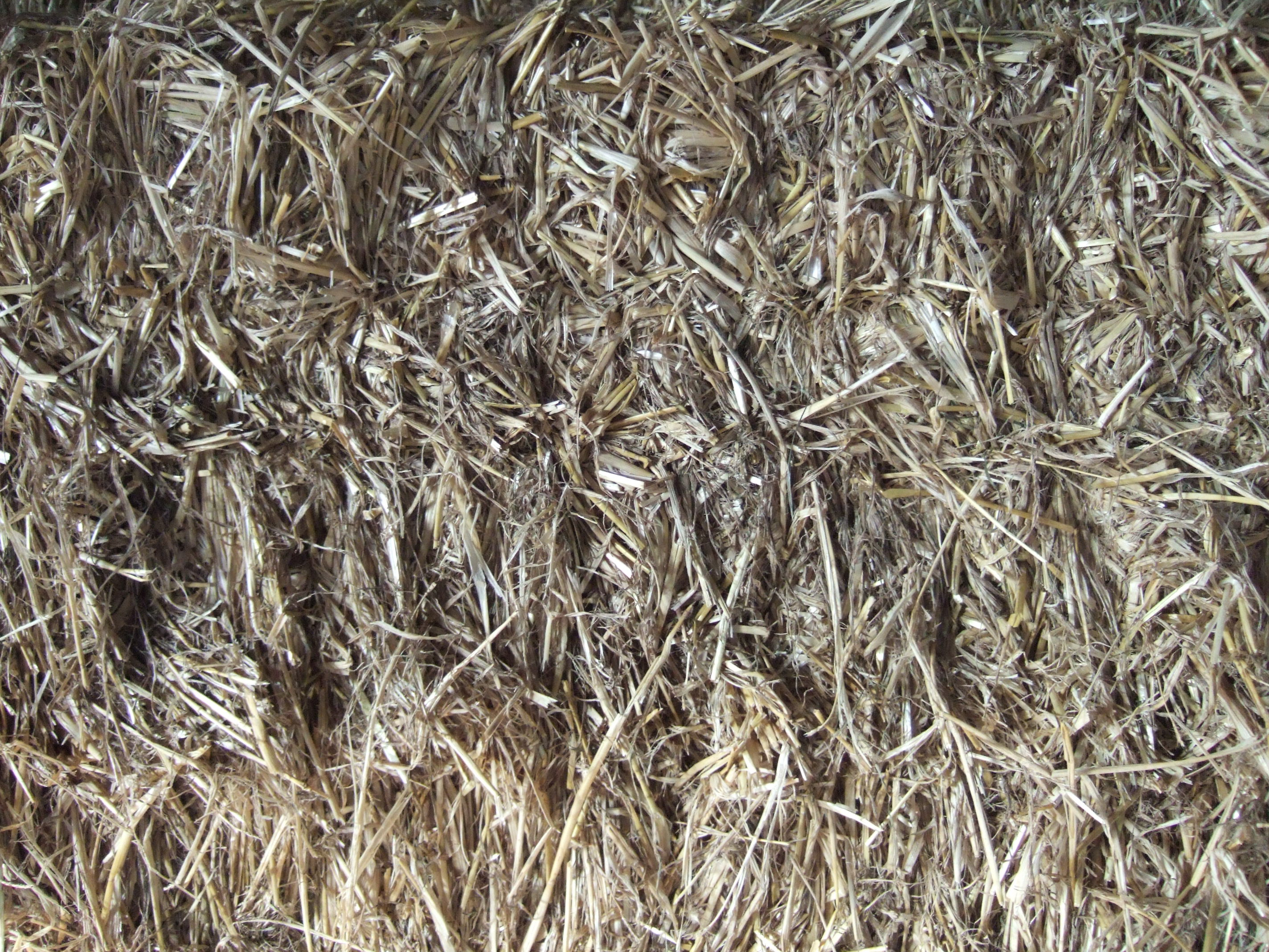 tabus hay straw dry grass cattle feed