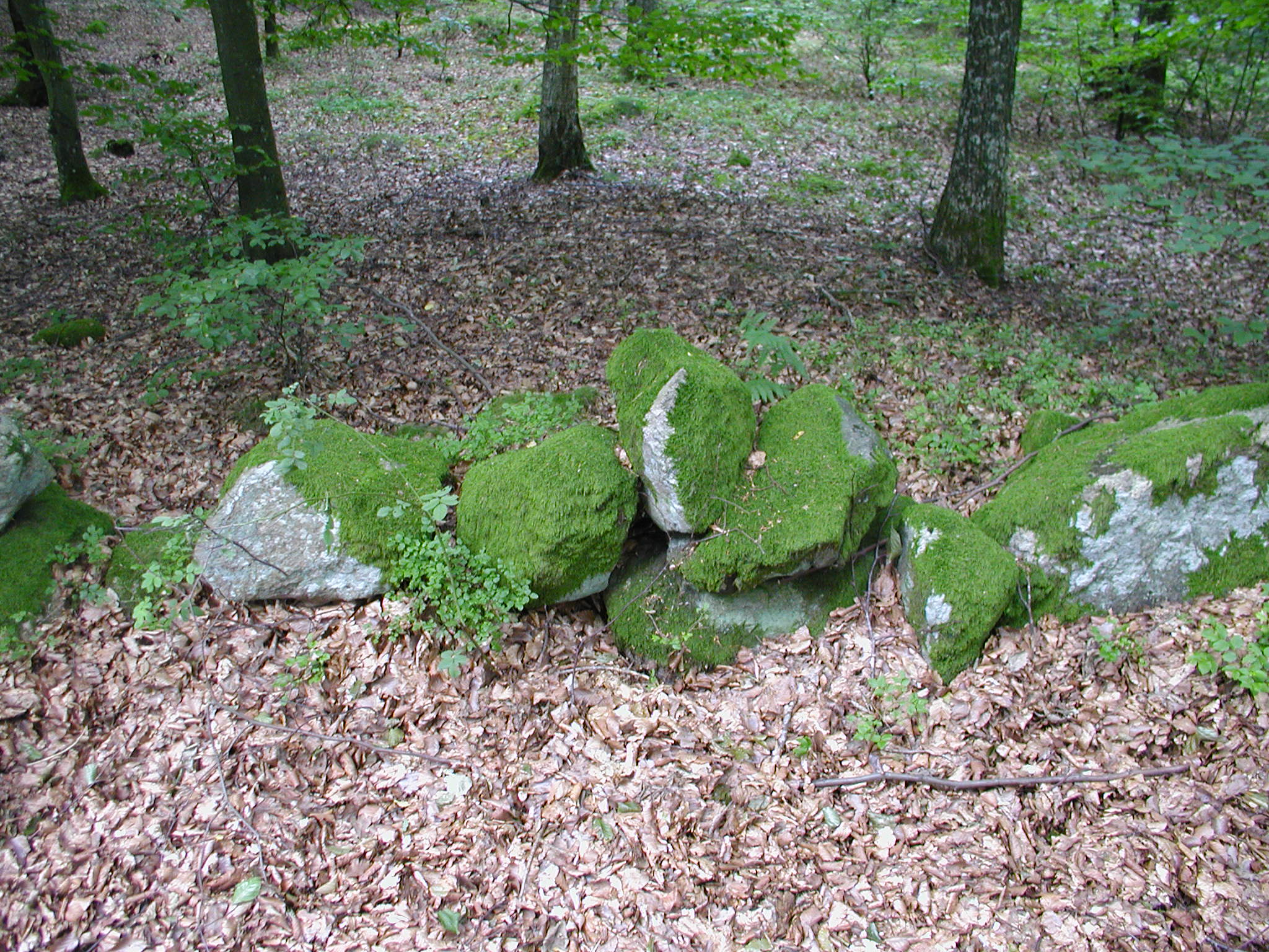 tabus rocks forest moss covered with green