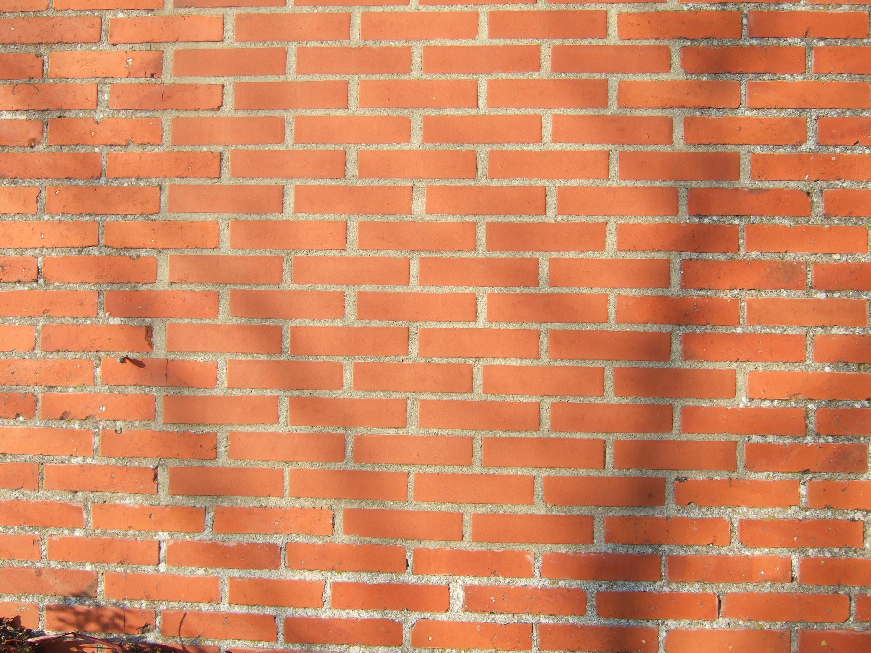 tabus walls new brickwall shadow tree branches texture red