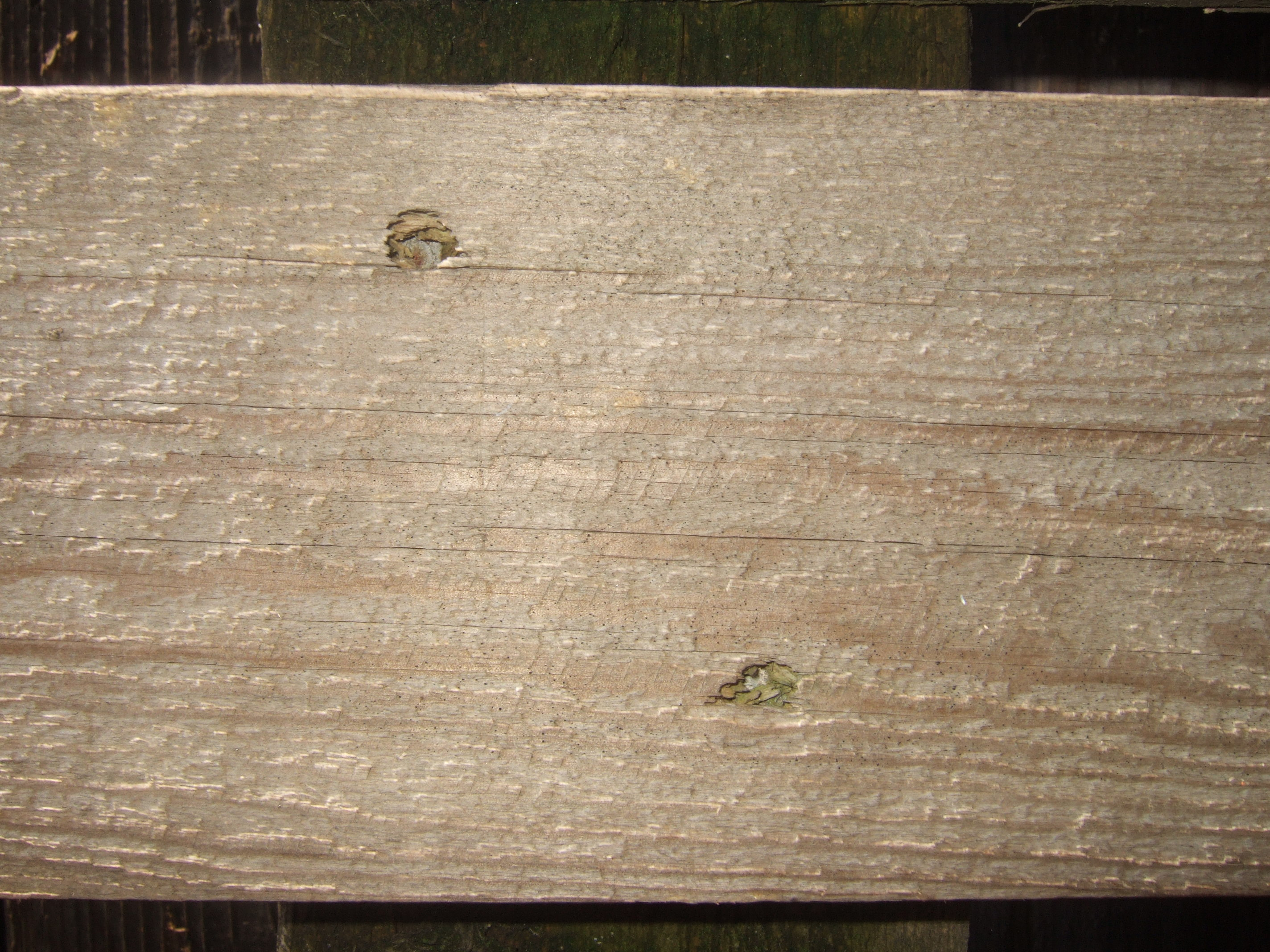 tabus wood woods chipped fine plank